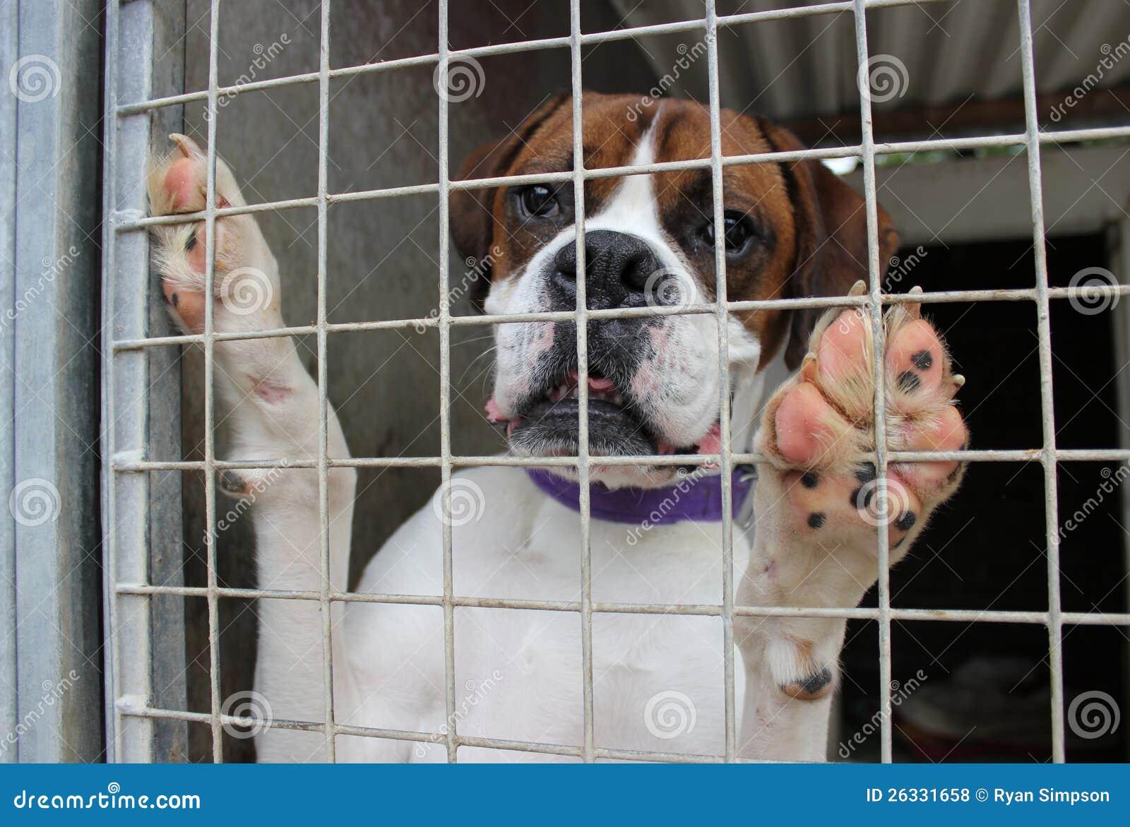 Hund in einem Rahmen