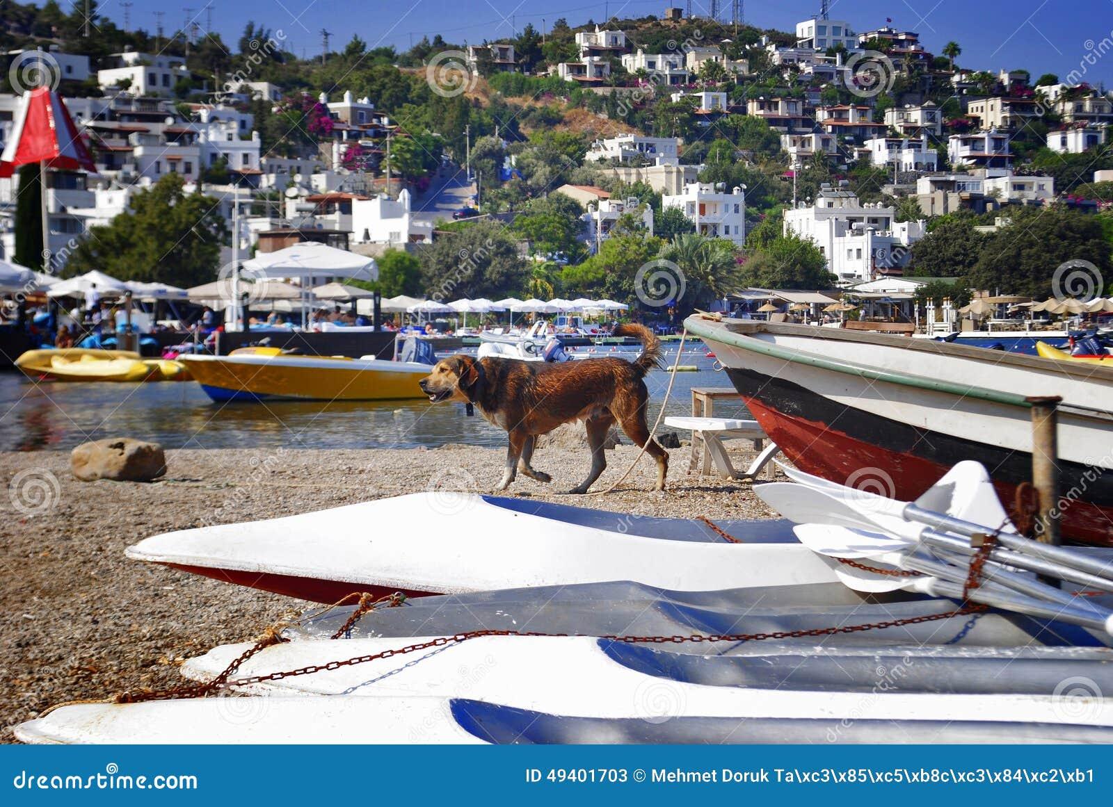Download Hund erhält naß stockbild. Bild von ozean, schauen, draußen - 49401703