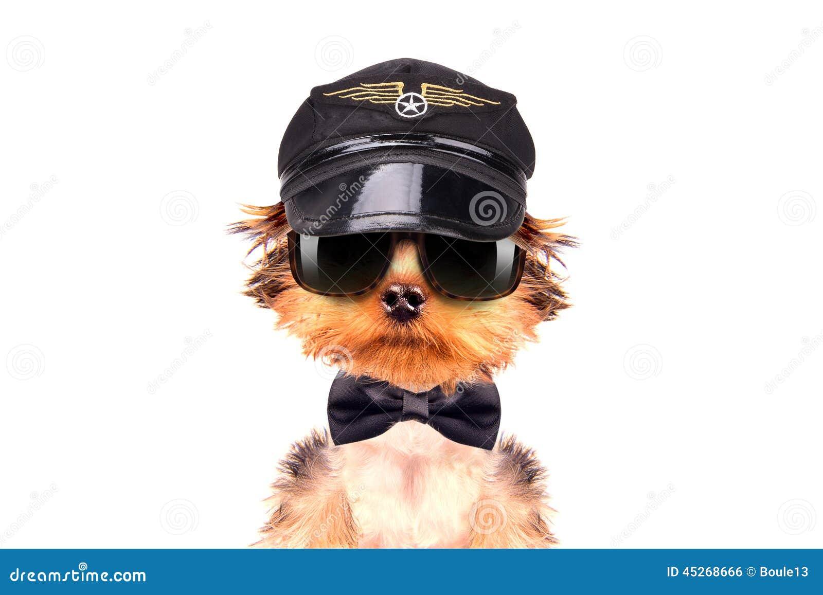 Hund gekleidet als Pilot