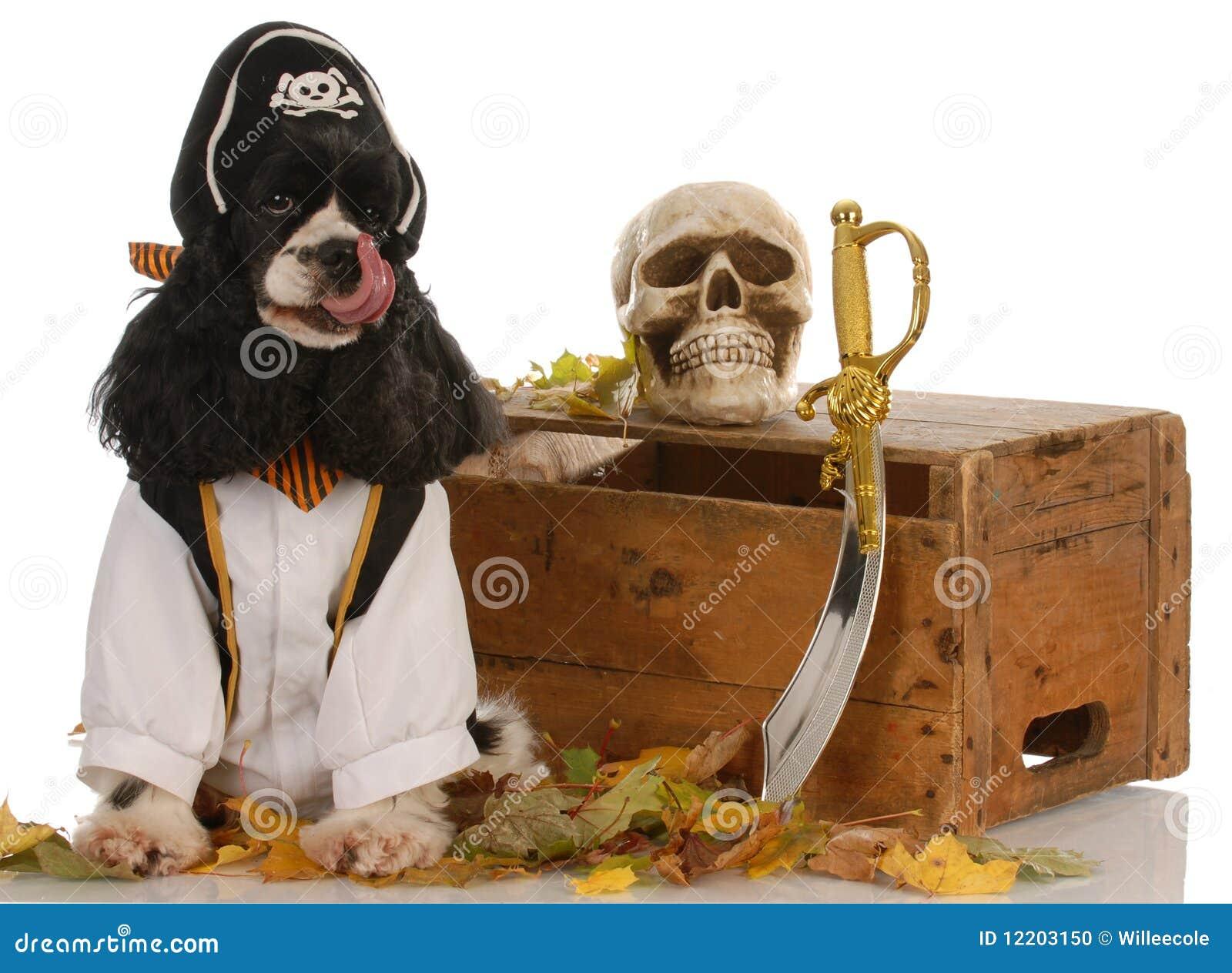 Hund gekleidet herauf als Piraten