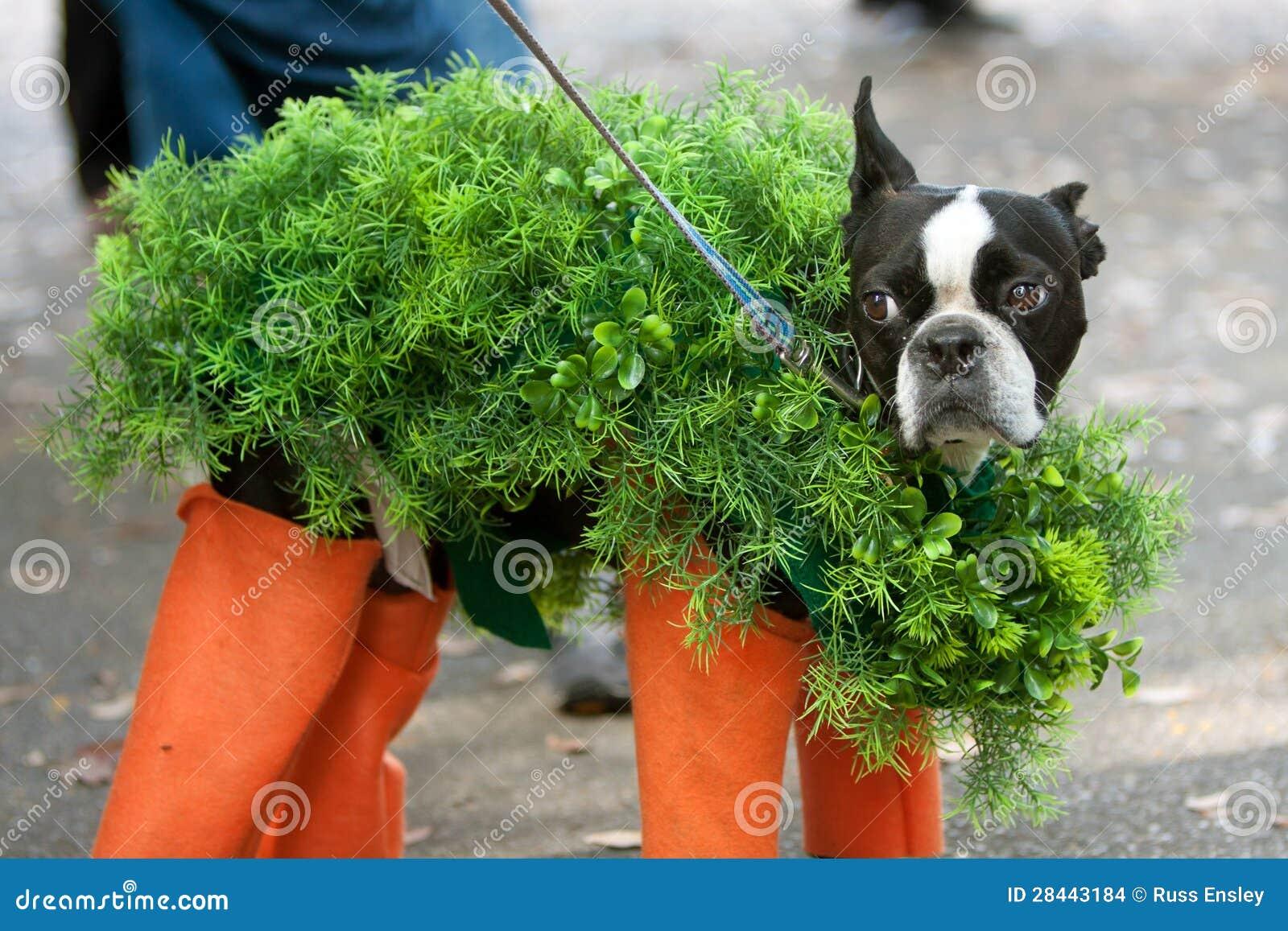 Hund Gekleidet Im Chia Haustier Kostum Fur Halloween Redaktionelles