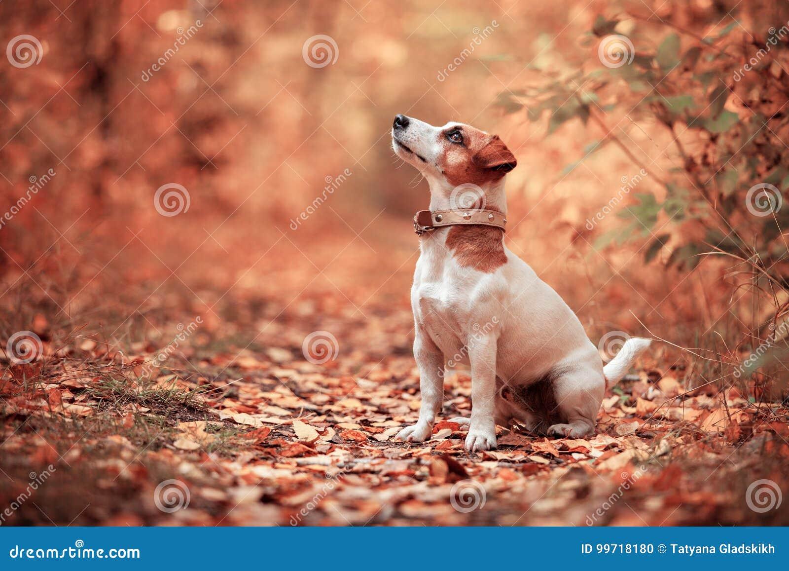 Hund am Herbst