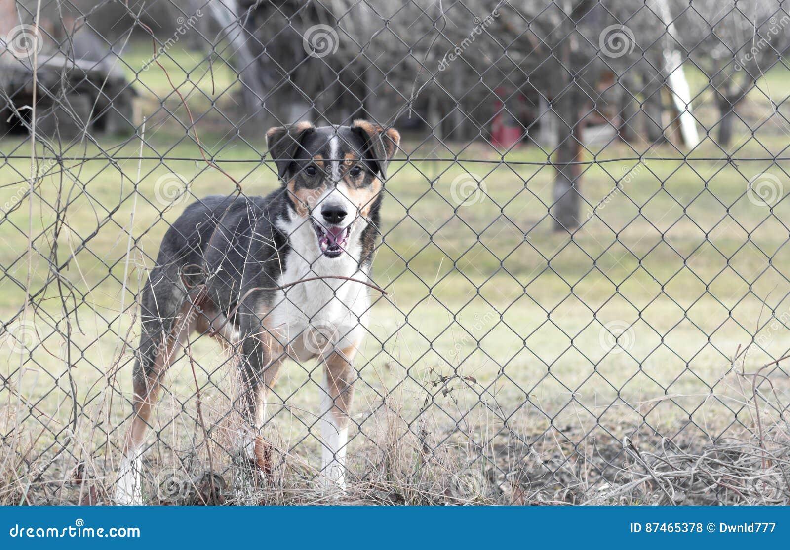 Hund Hinter Zaun Im Garten Stockfoto Bild Von Schauen 87465378