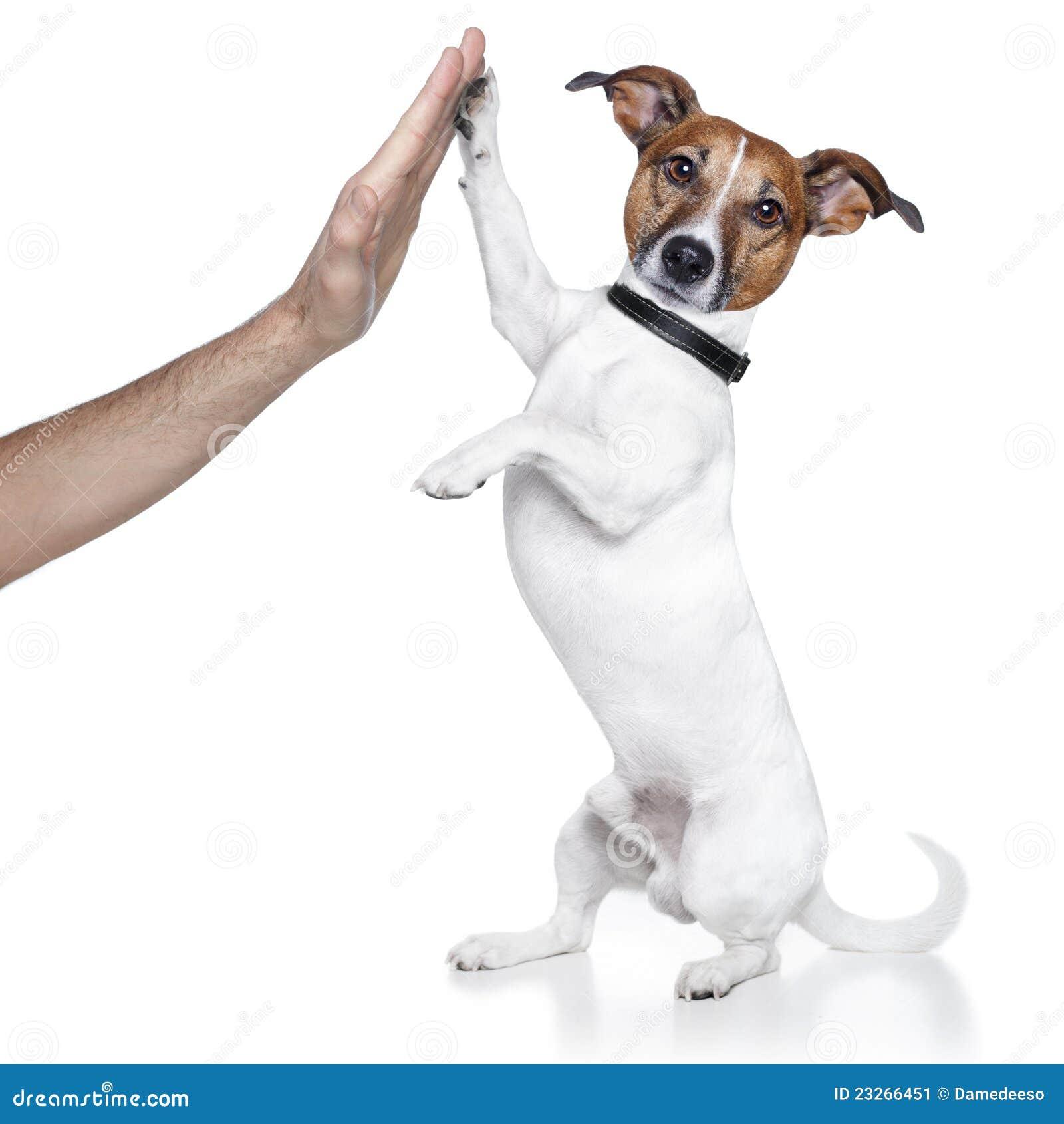 Hund hohe fünf