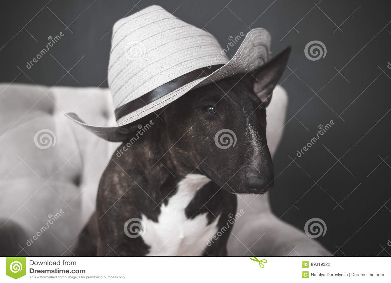 Hund, Hut