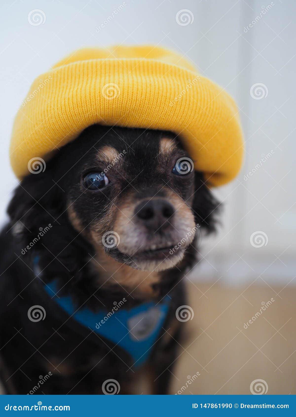 Hund i den gula hatten, st?ende