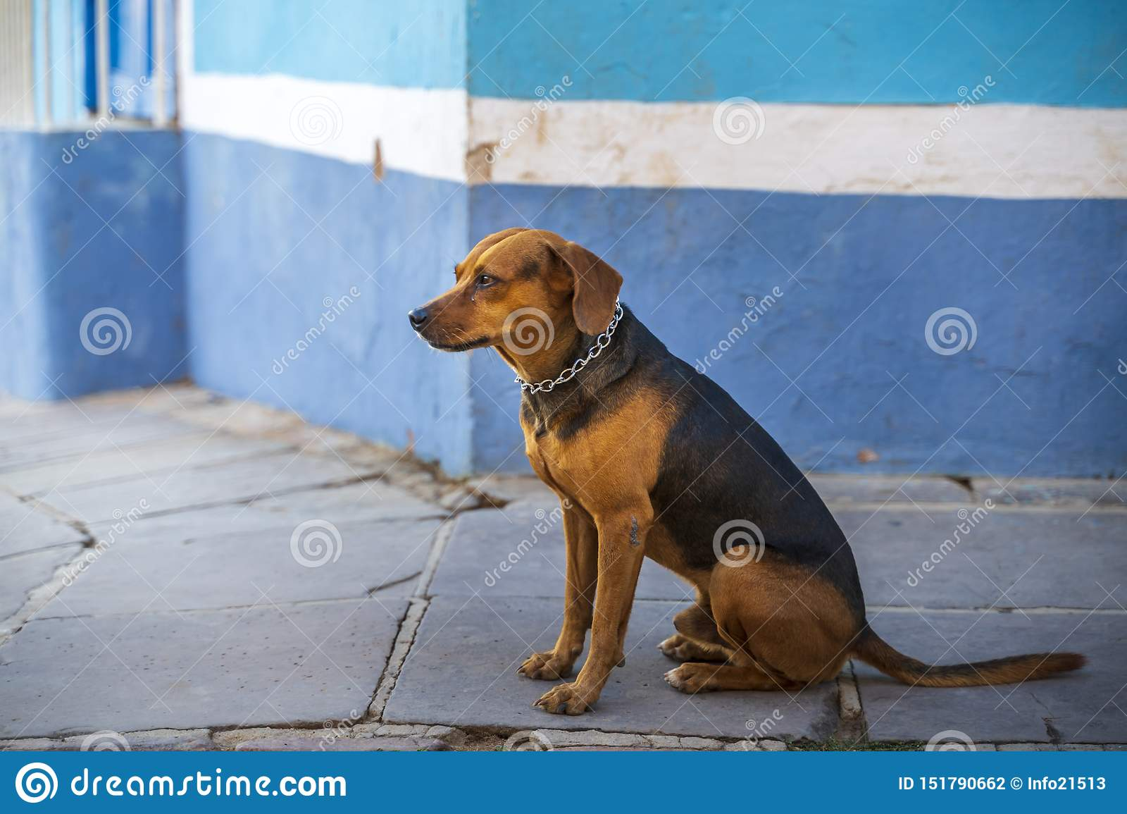 Hund i det koloniala området av Trinidad, Kuba