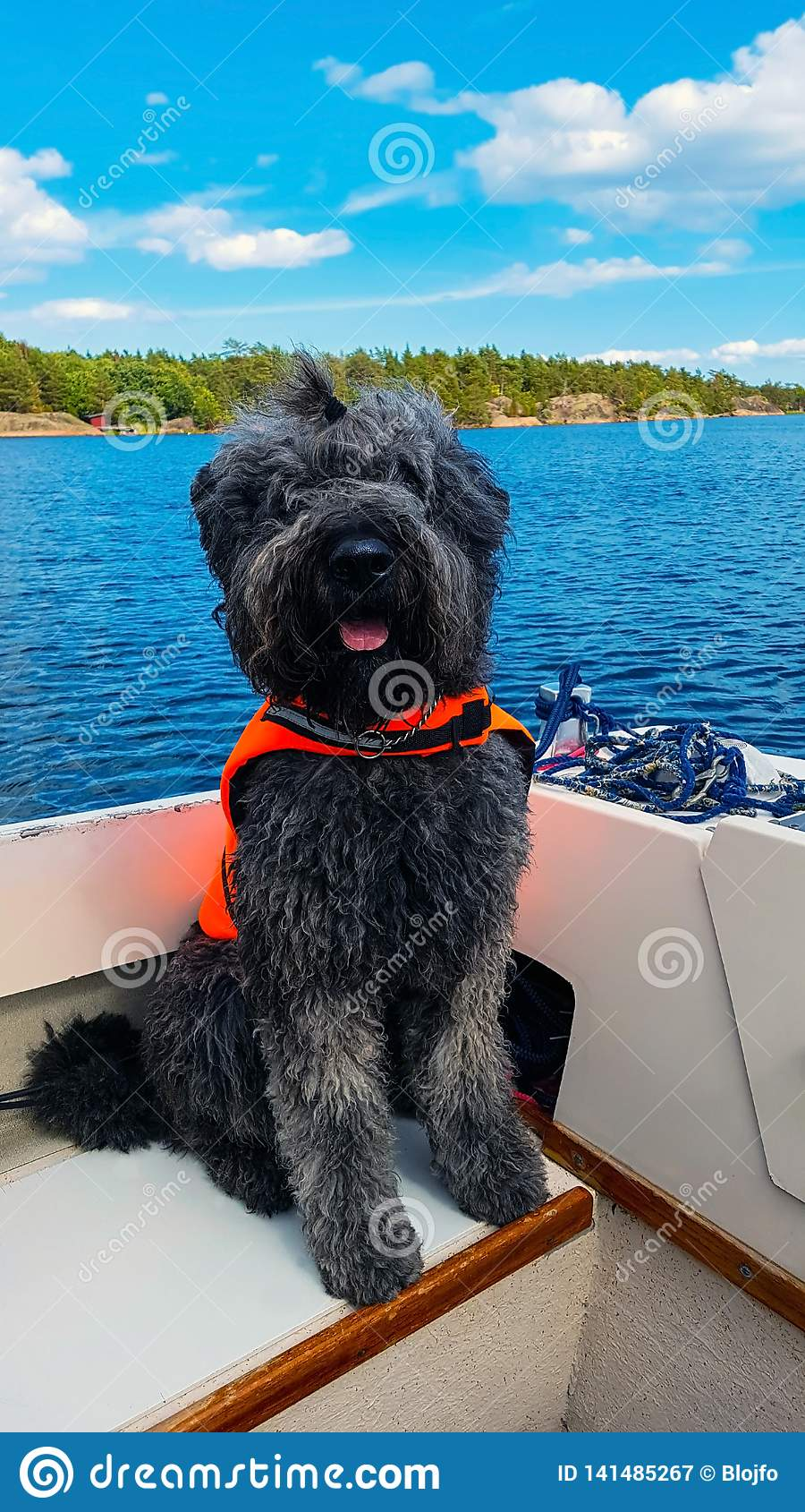 Hund i fartyg