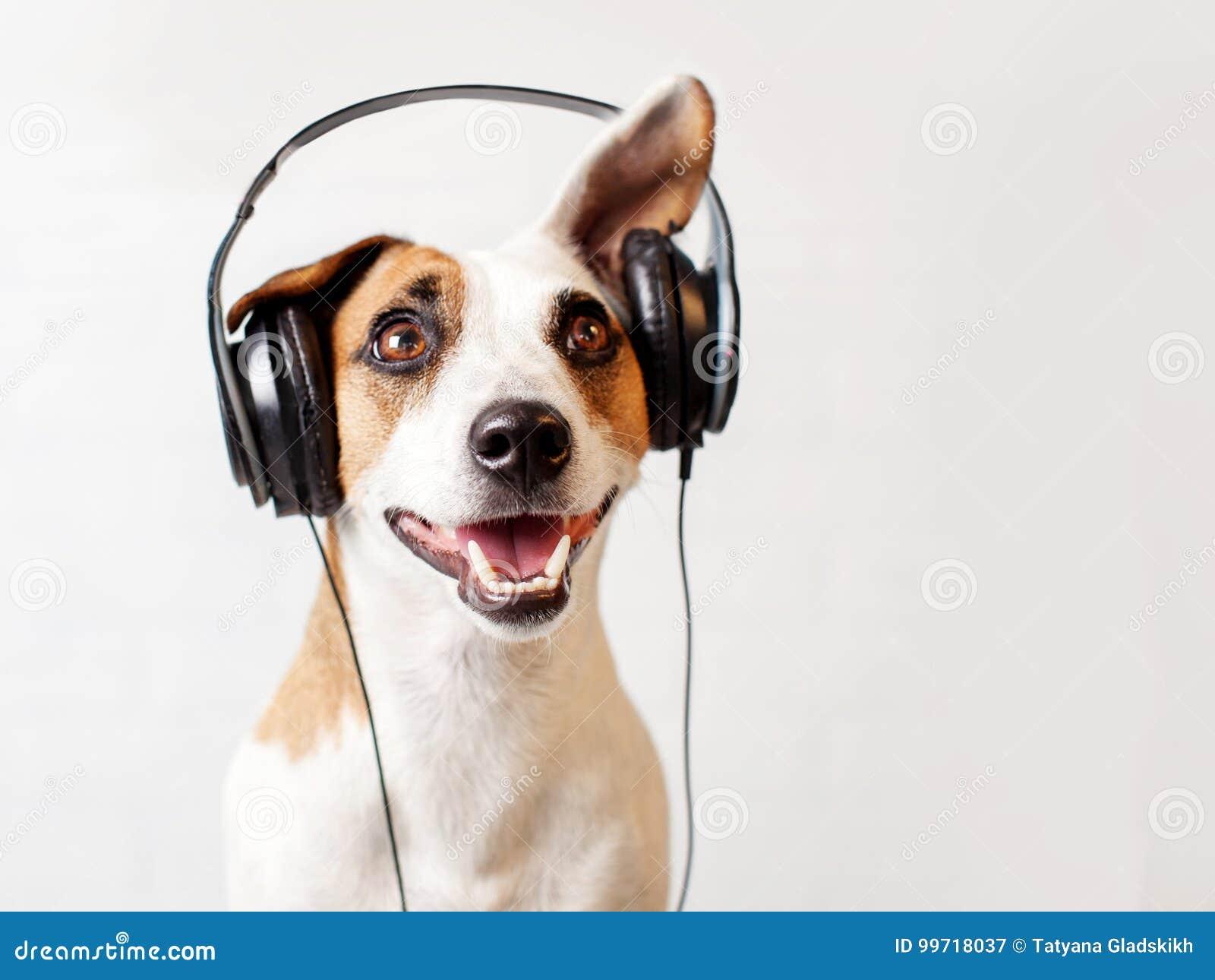Hund i hörlurar som lyssnar till musik