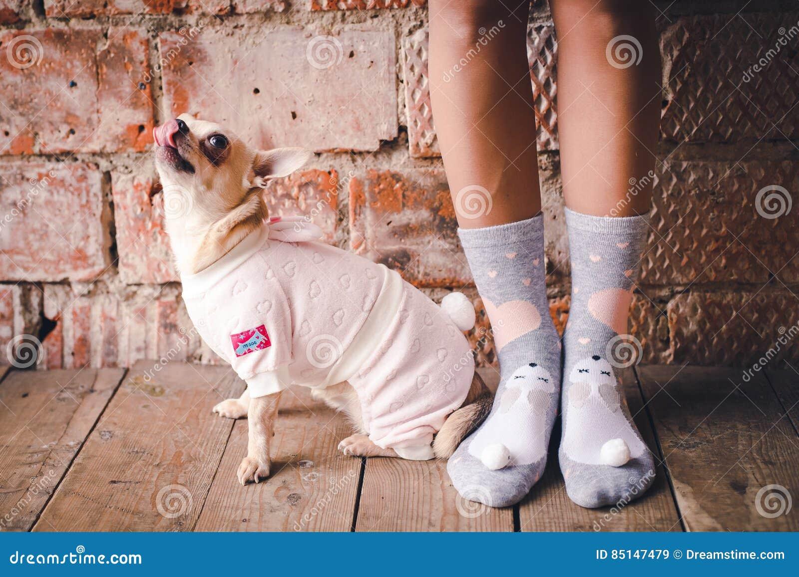 Hund i hemtrevlig klänning
