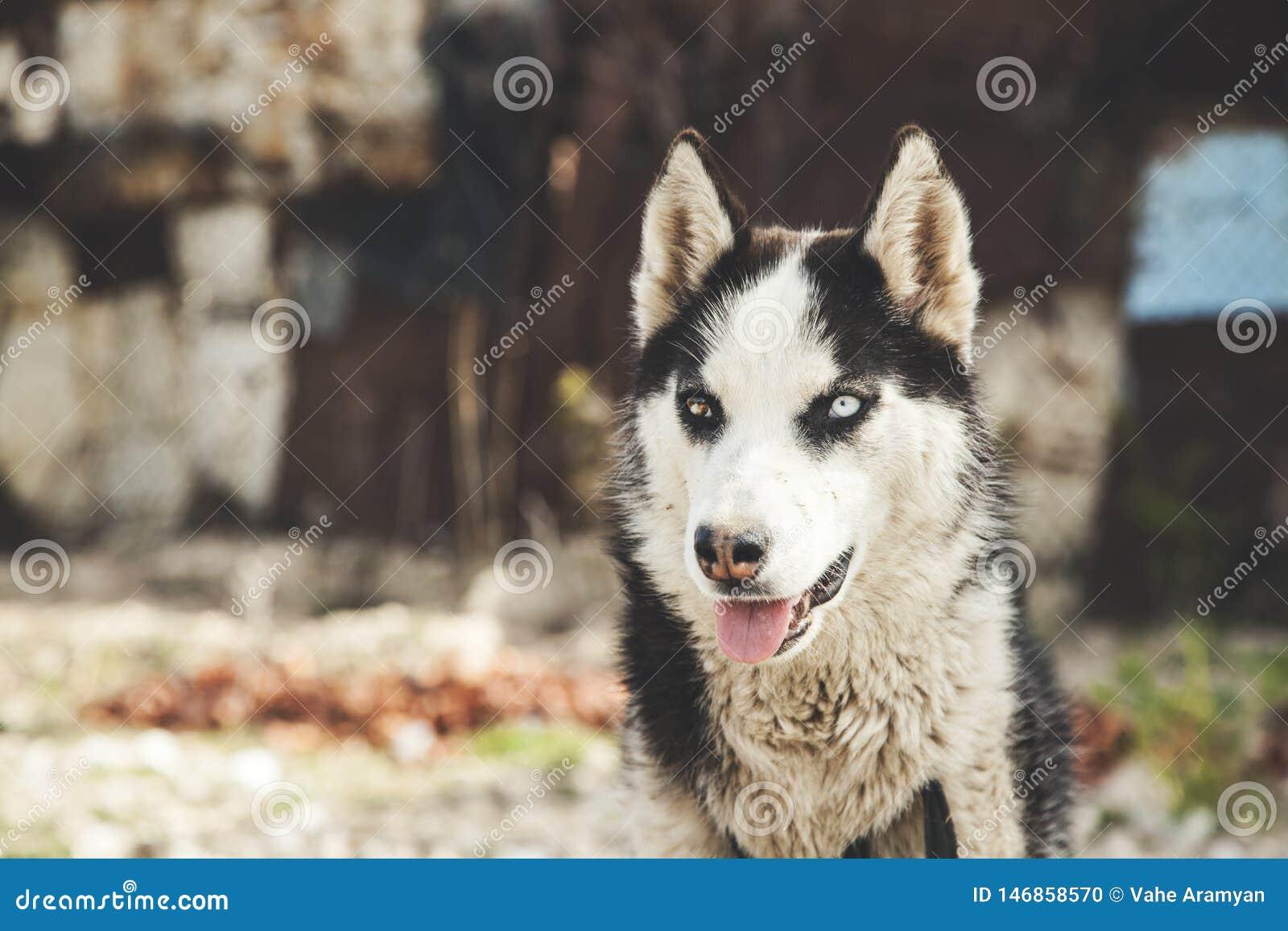 Hund i natur