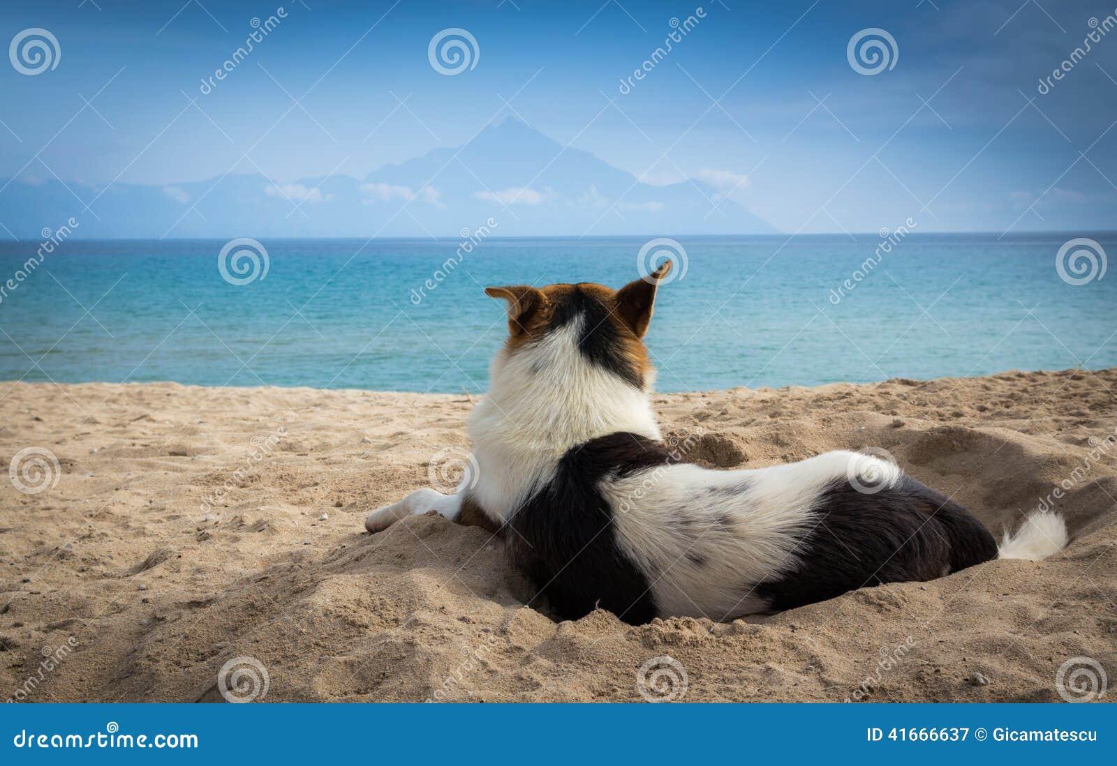 Hund i sand
