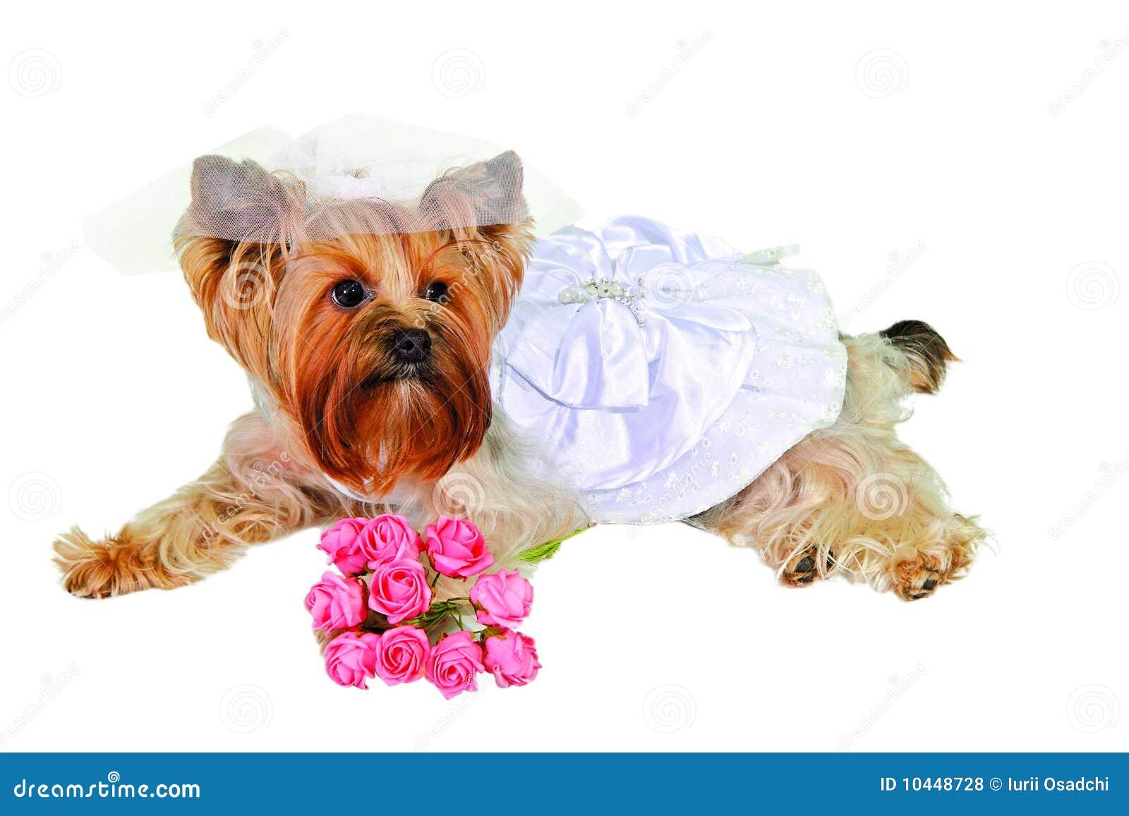 Nett Hochzeitskleid Für Hund Ideen - Hochzeit Kleid Stile Ideen ...