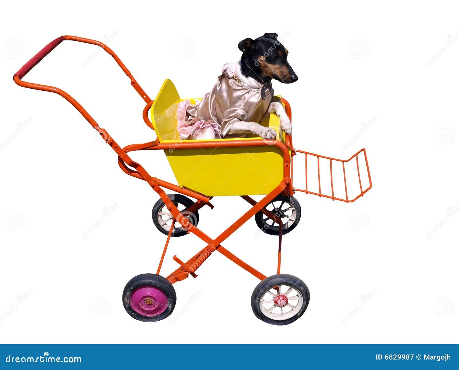 hund im kinderwagen stockbild bild von abgebrochen kleid. Black Bedroom Furniture Sets. Home Design Ideas