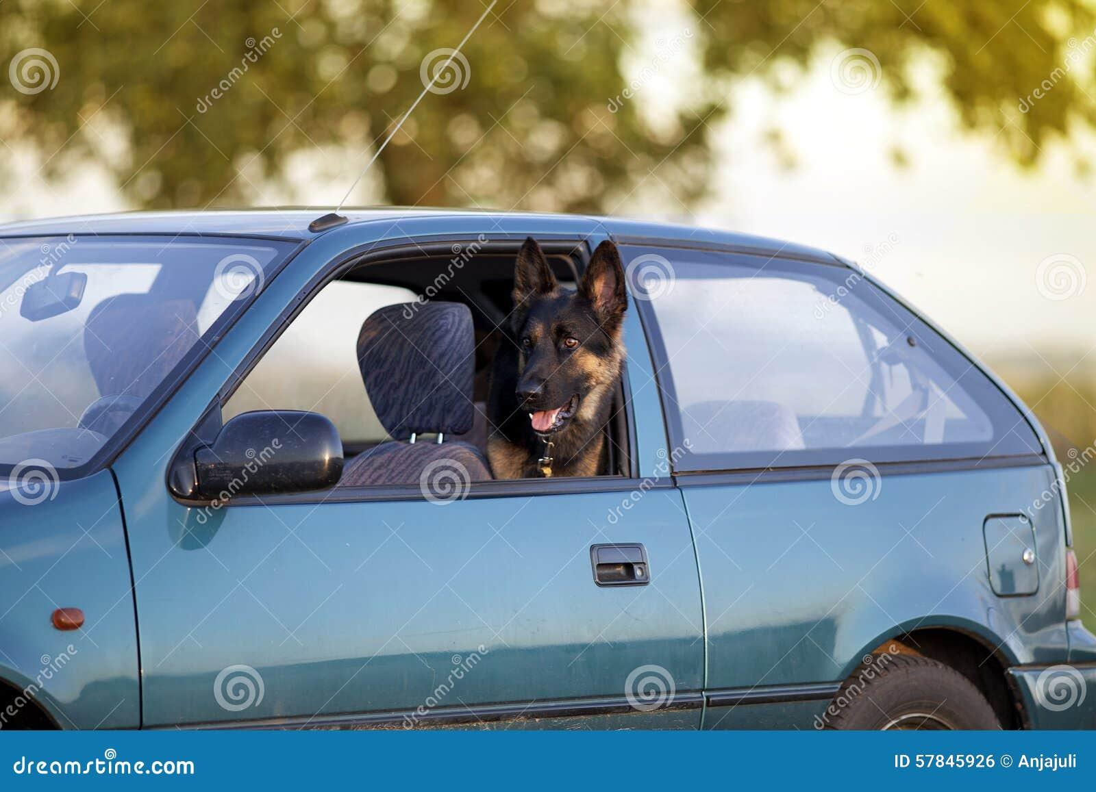 Hund im Löschwagen im Sommer