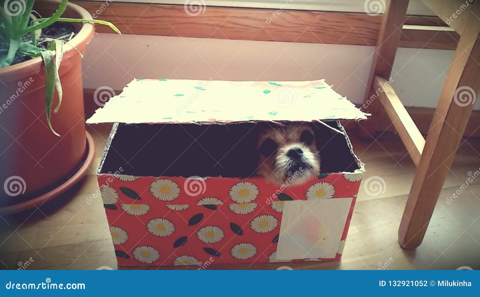 Hund innerhalb einer Geschenkbox
