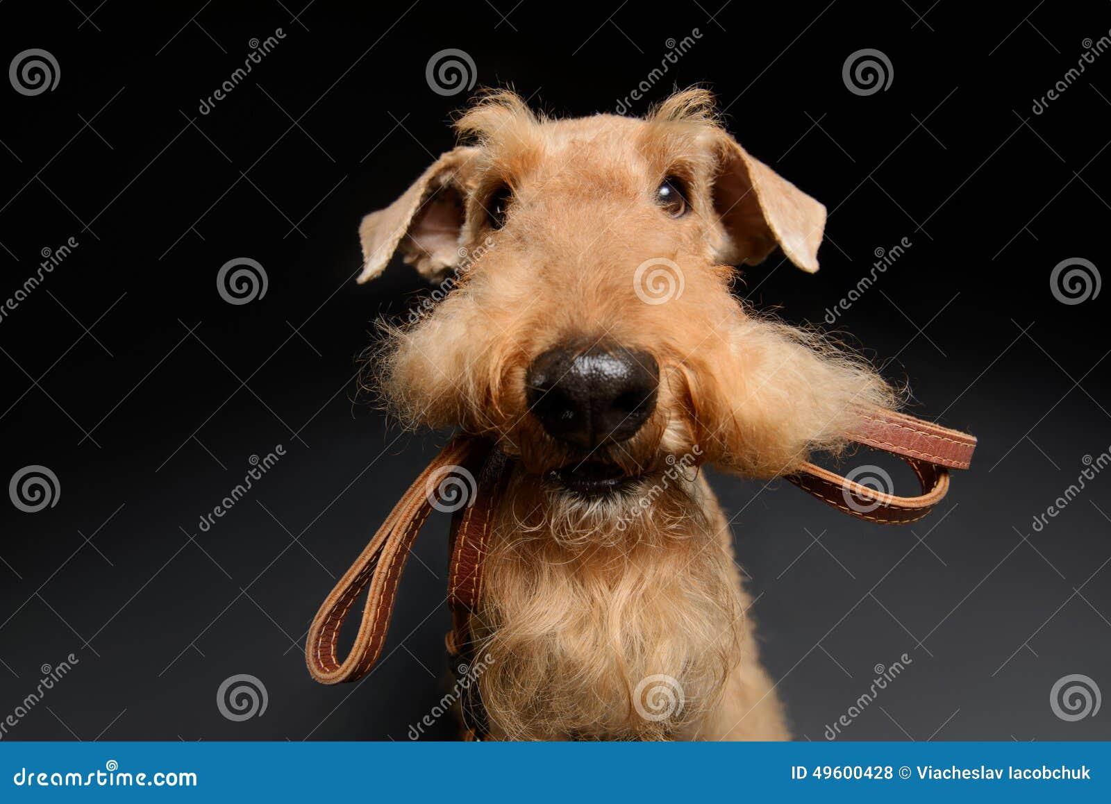 Hund Bester Freund