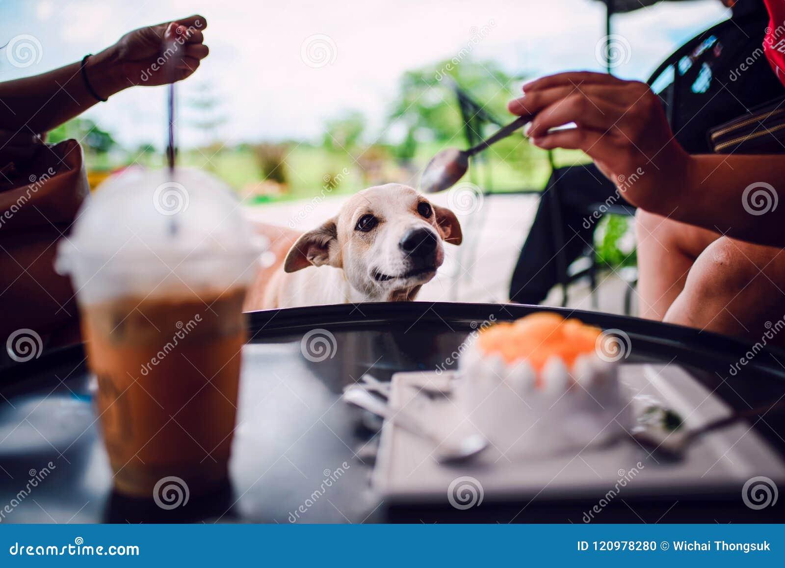 Hund möchte Kuchen essen