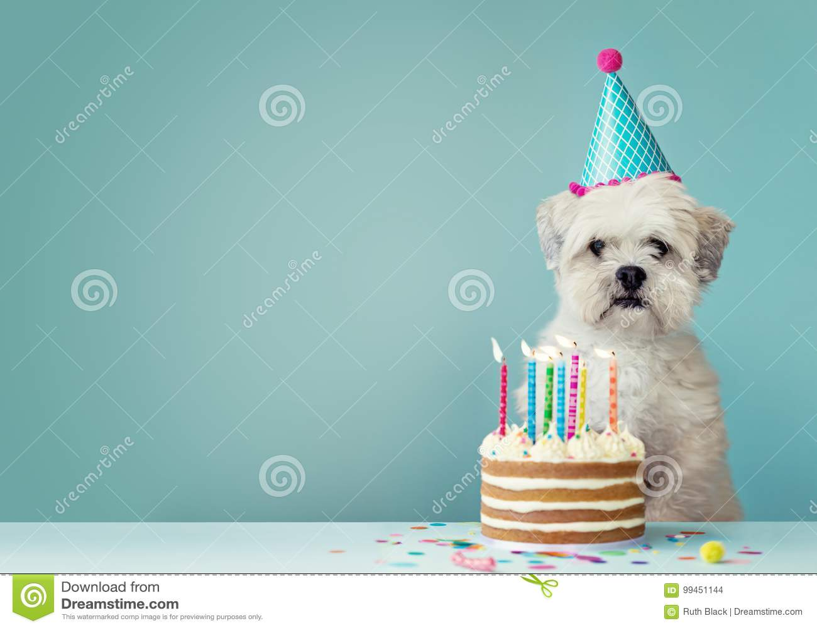 Hund med födelsedagkakan