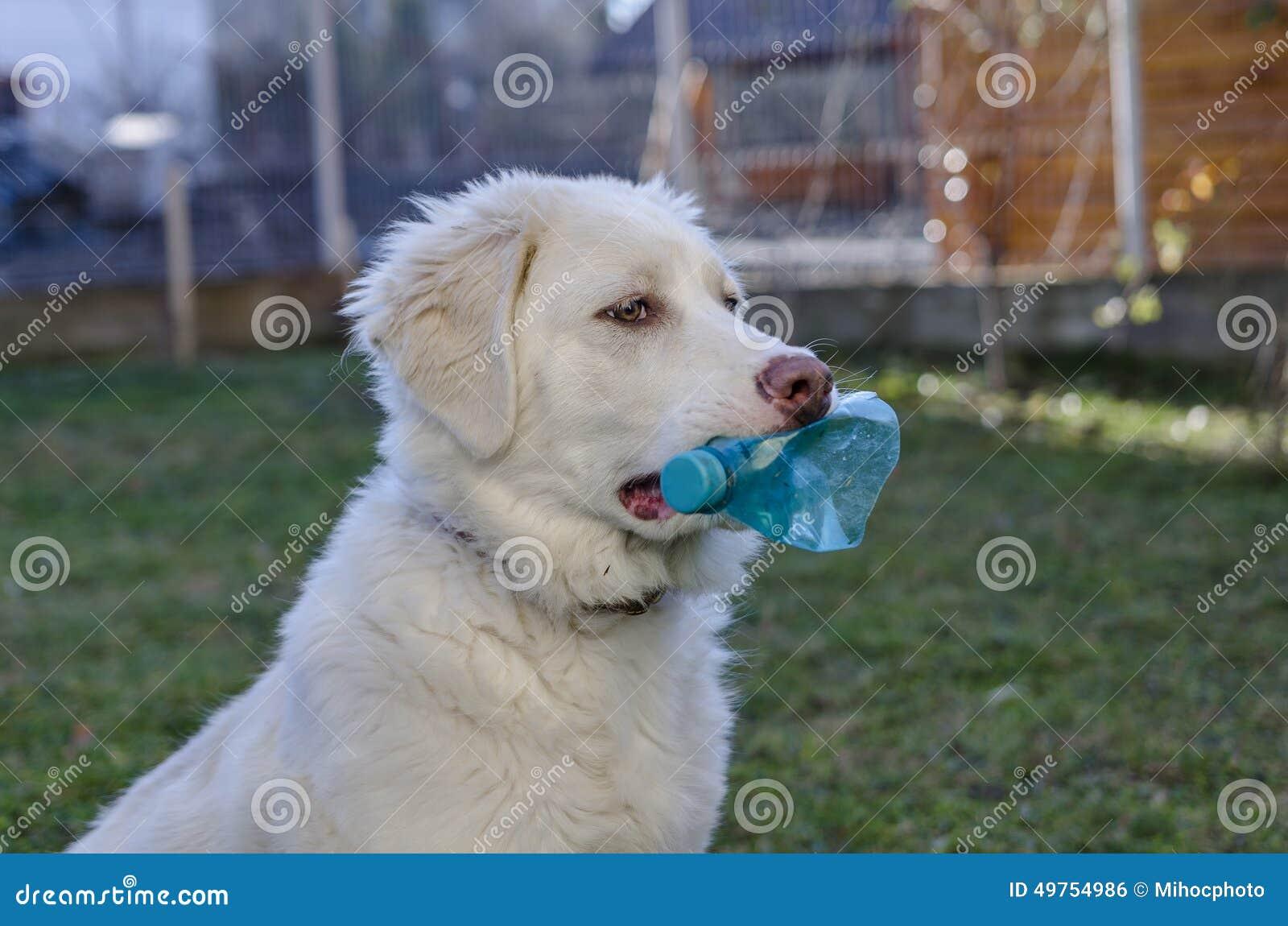 Hund med flaskan