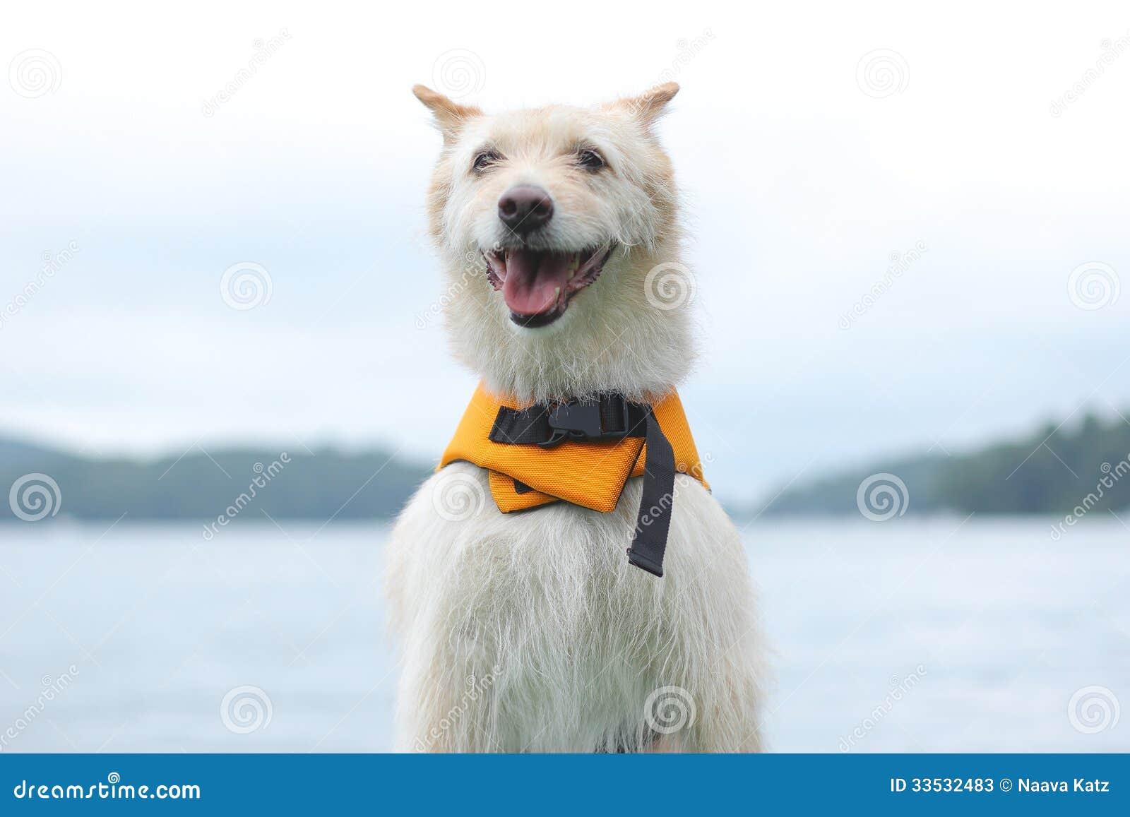 Hund med flytvästen