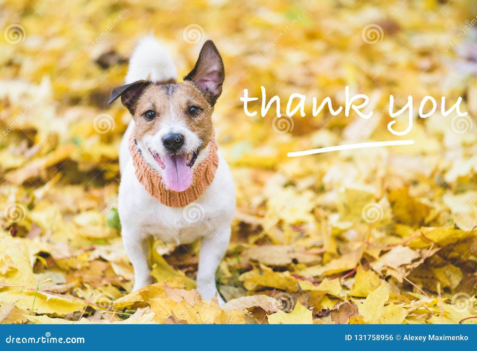 Hund med lyckligt och tacksamt framsidauttryck på nedgånghöstsidor som ett tacksägelsebegrepp