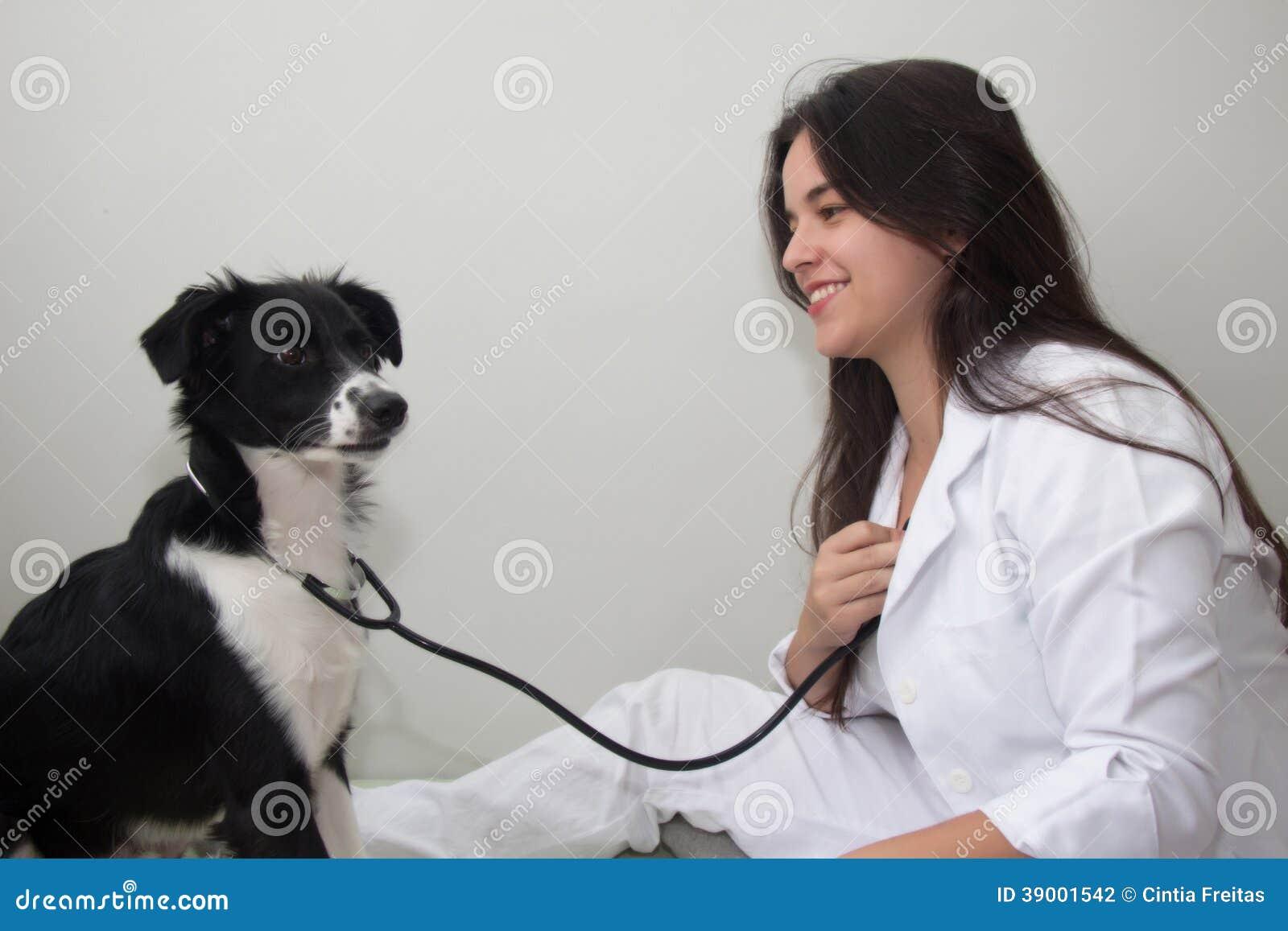 Hund med stetoskopet som undersöker en kvinnlig veterinär