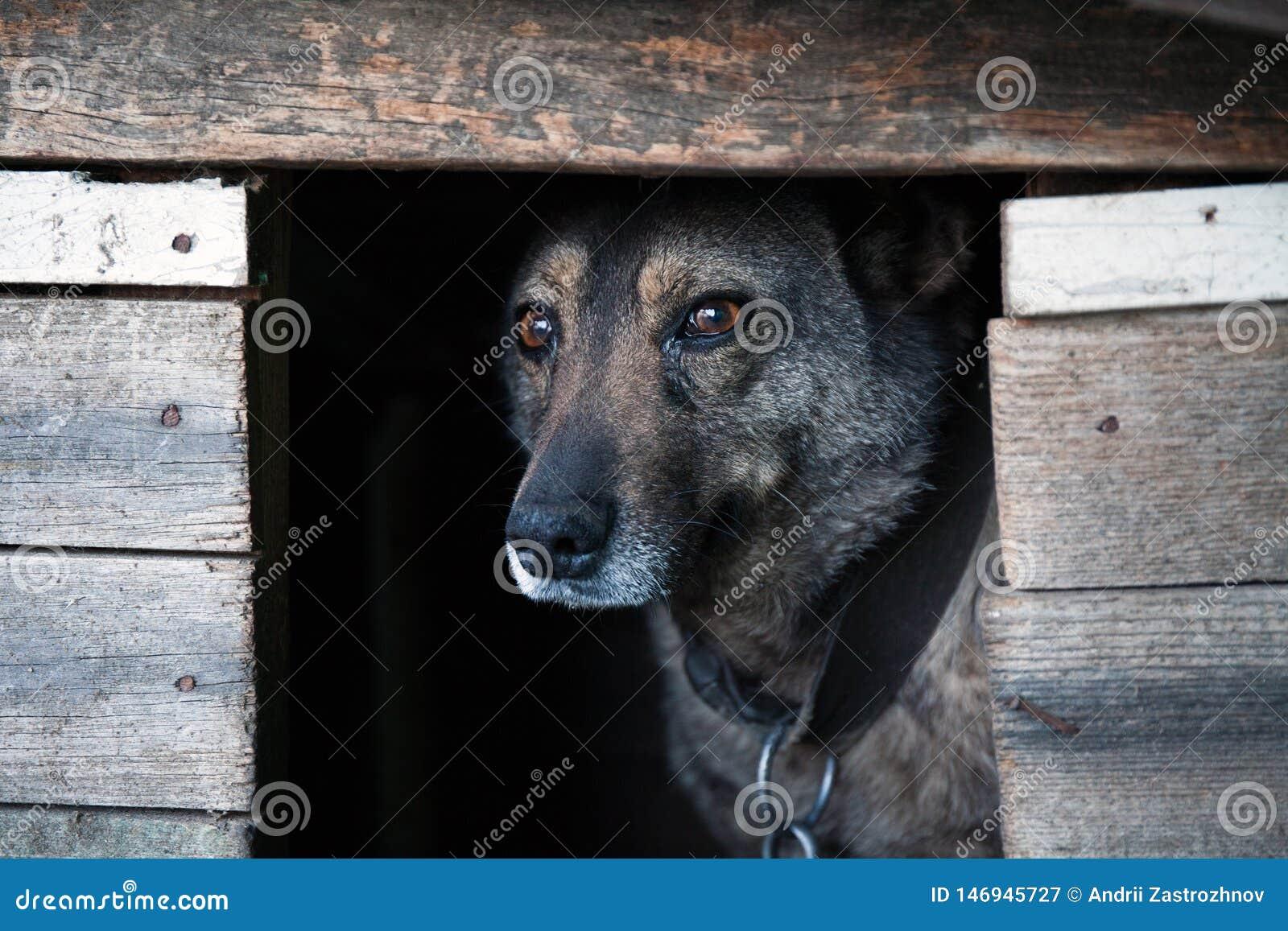 Hund mit einem traurigen Blick in einem dunklen Kasten
