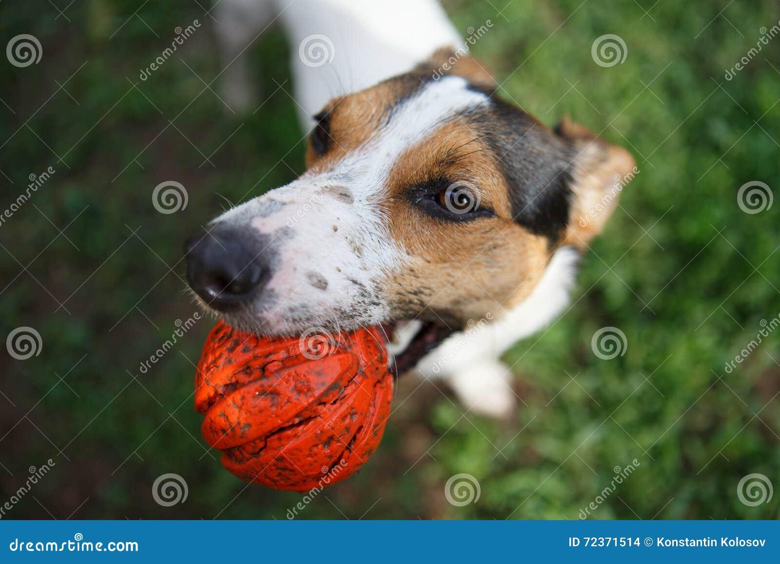 Hund mit Kugel im Mund