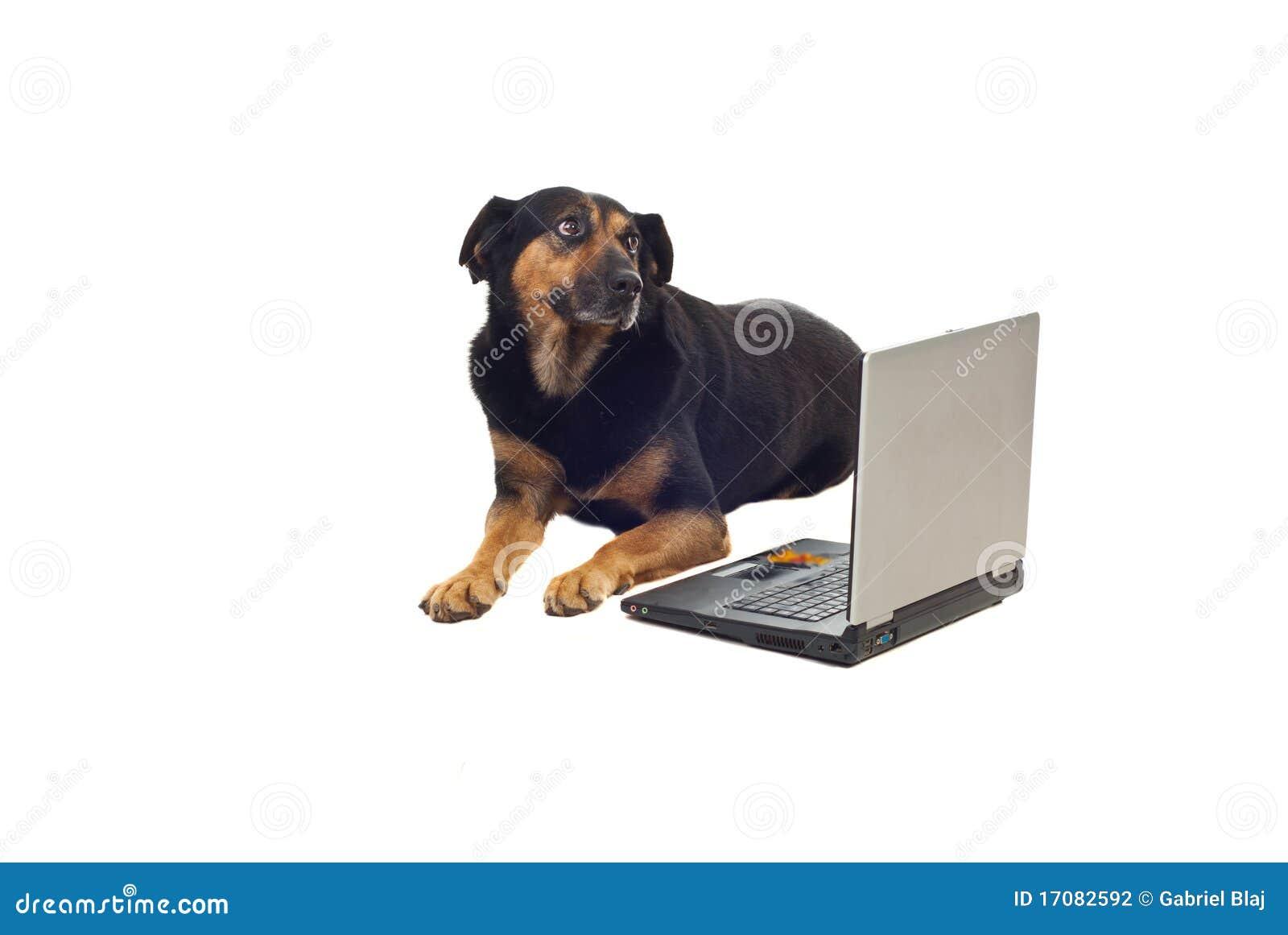 Hund mit Laptop