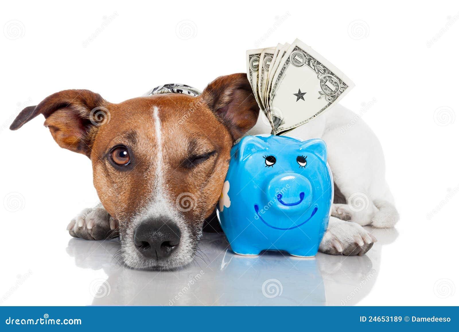 Hund mit piggy Querneigung