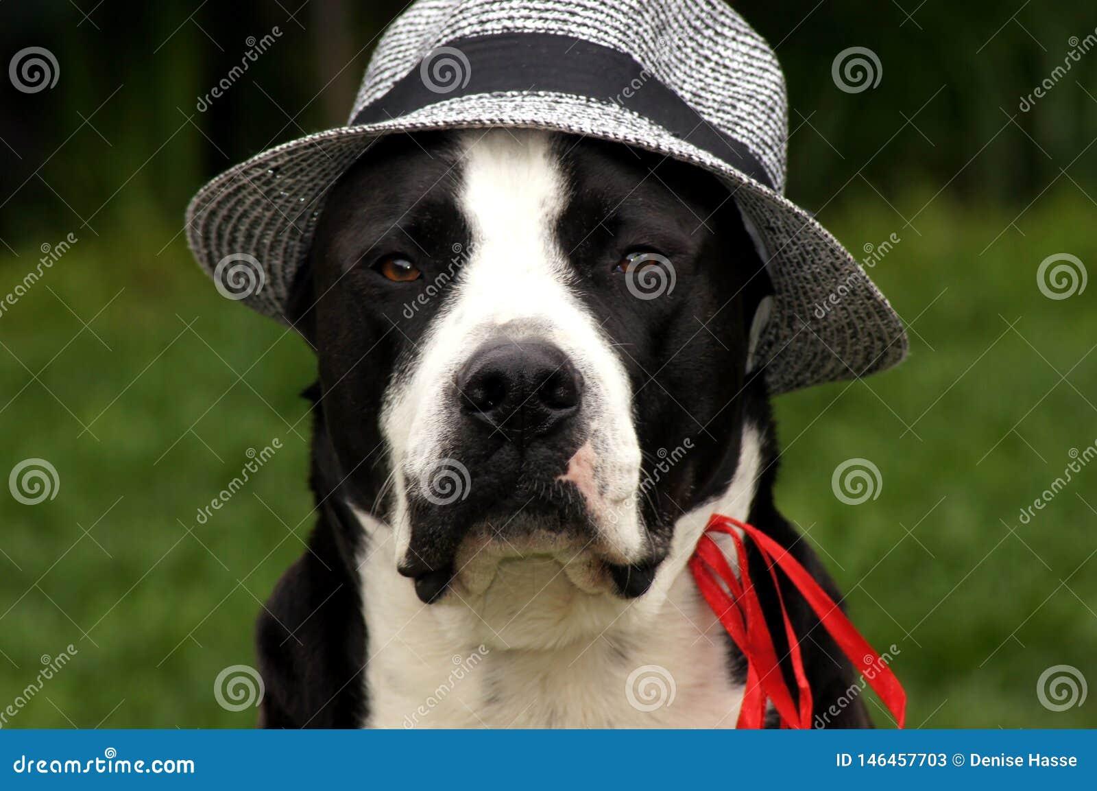 Hund mit Sonnenhut auf der grünen Wiese