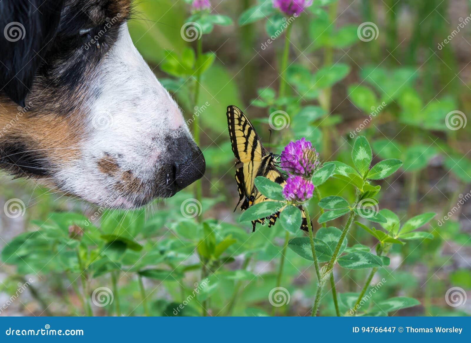 Hund och fjäril