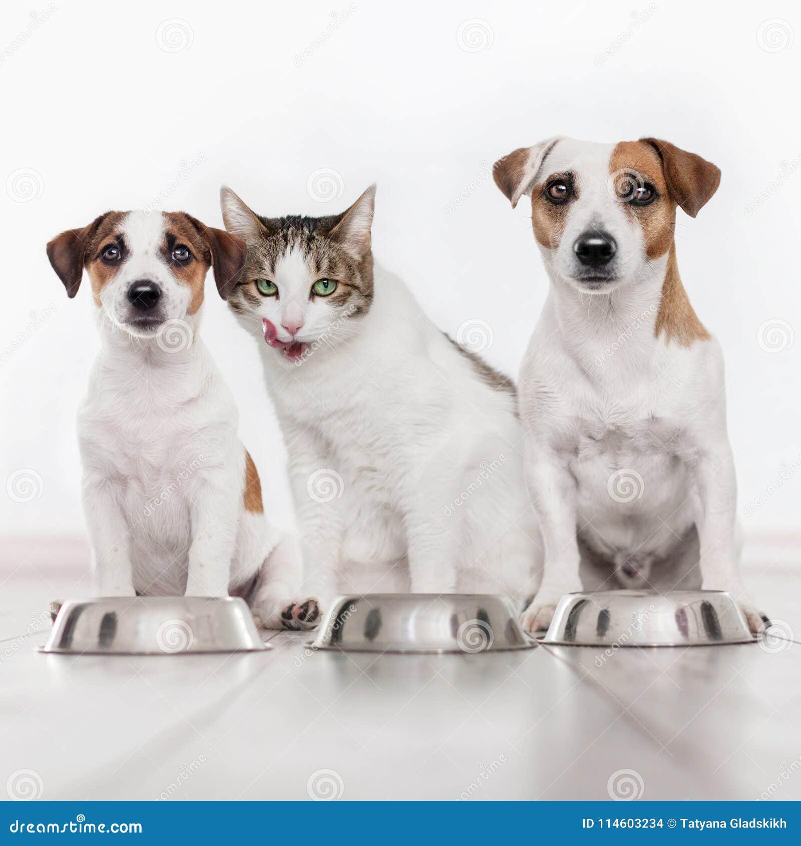 Hund och katt som äter mat