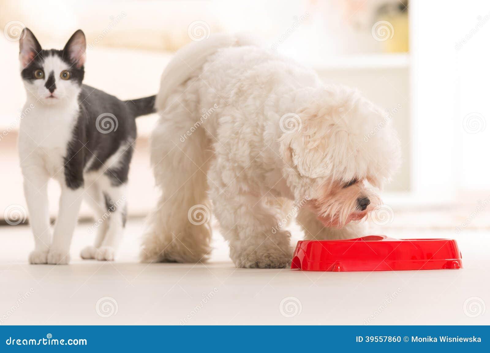 Hund och katt som äter mat från en bunke
