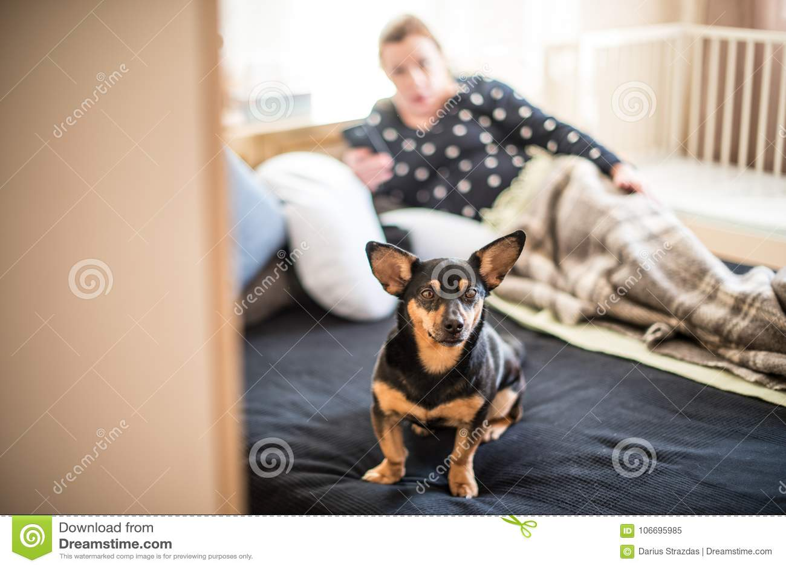 Hund på en säng