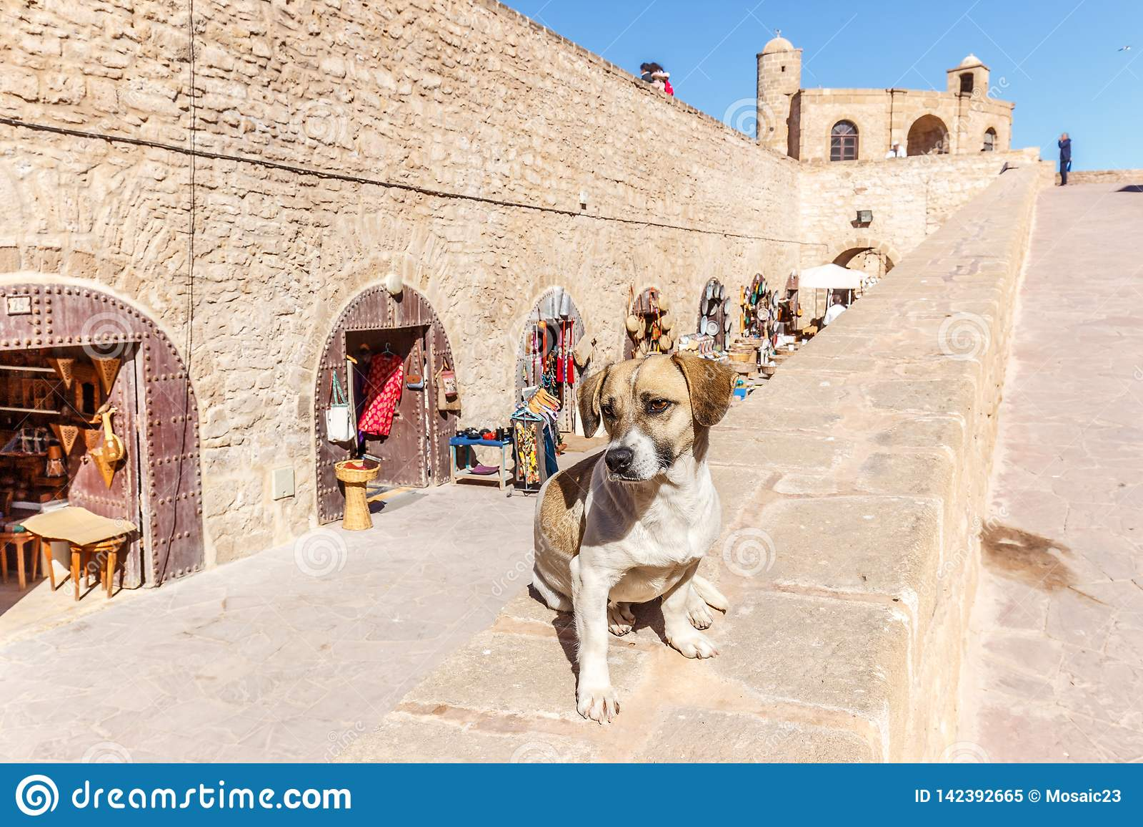 Hund på en vägg på Essaouira vallar