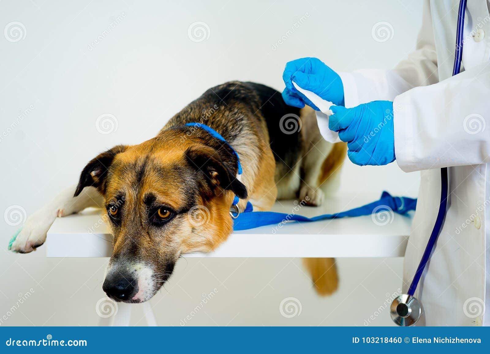 Hund på en veterinär