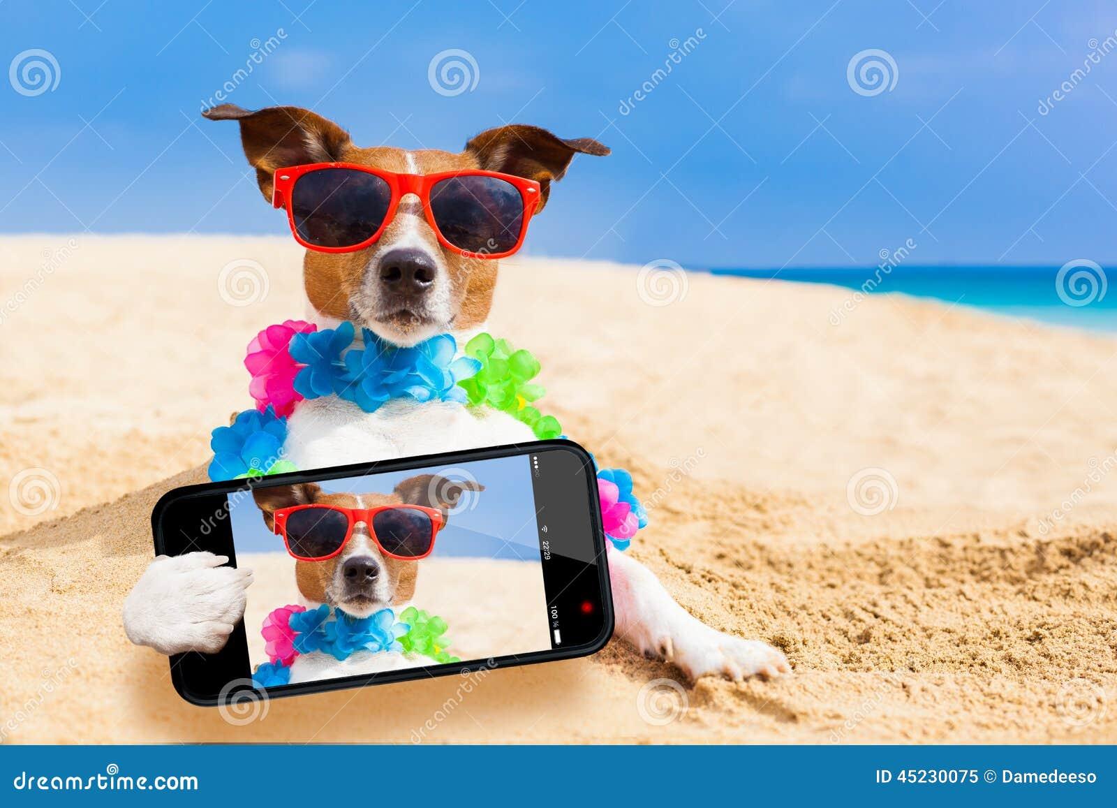 Hund på strandselfien