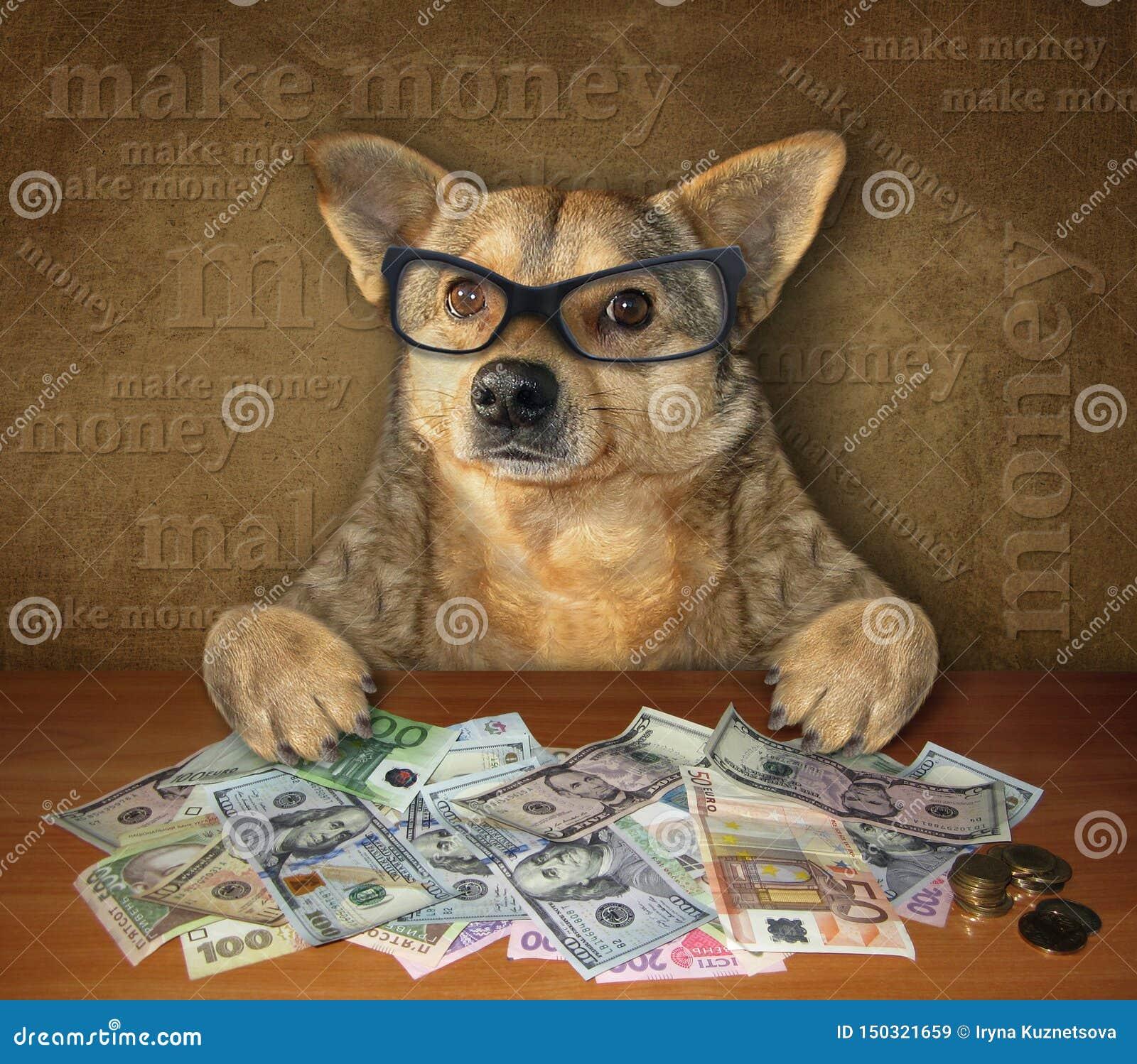 Hund på tabellen med dollar