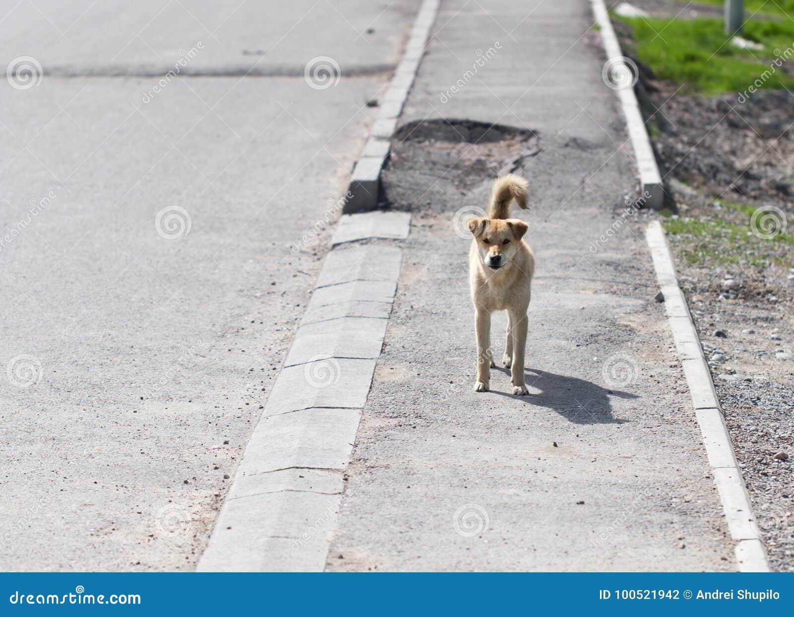 Hund på trottoaren