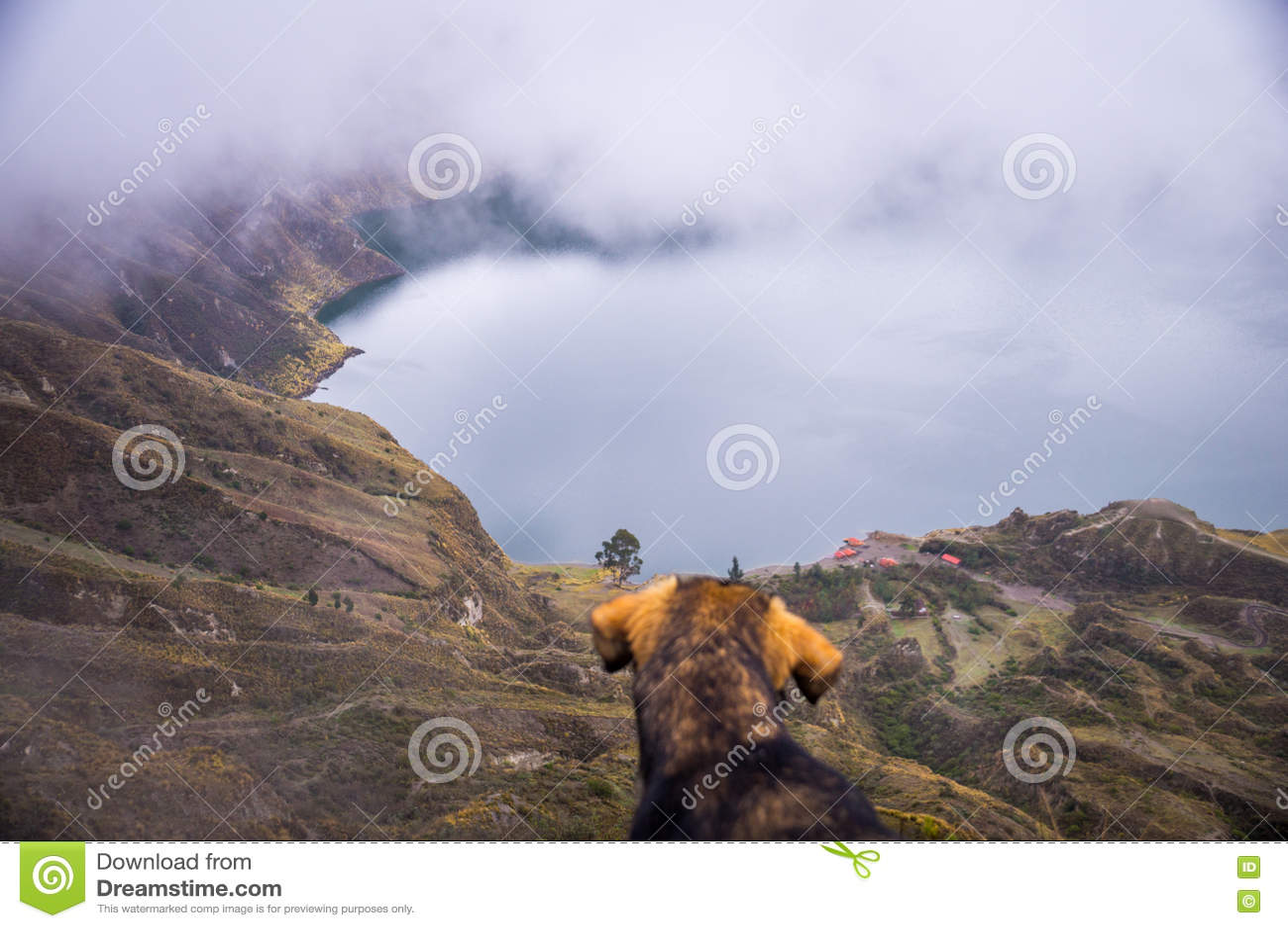 Hund am Quilotoa-Kratersee, Ecuador