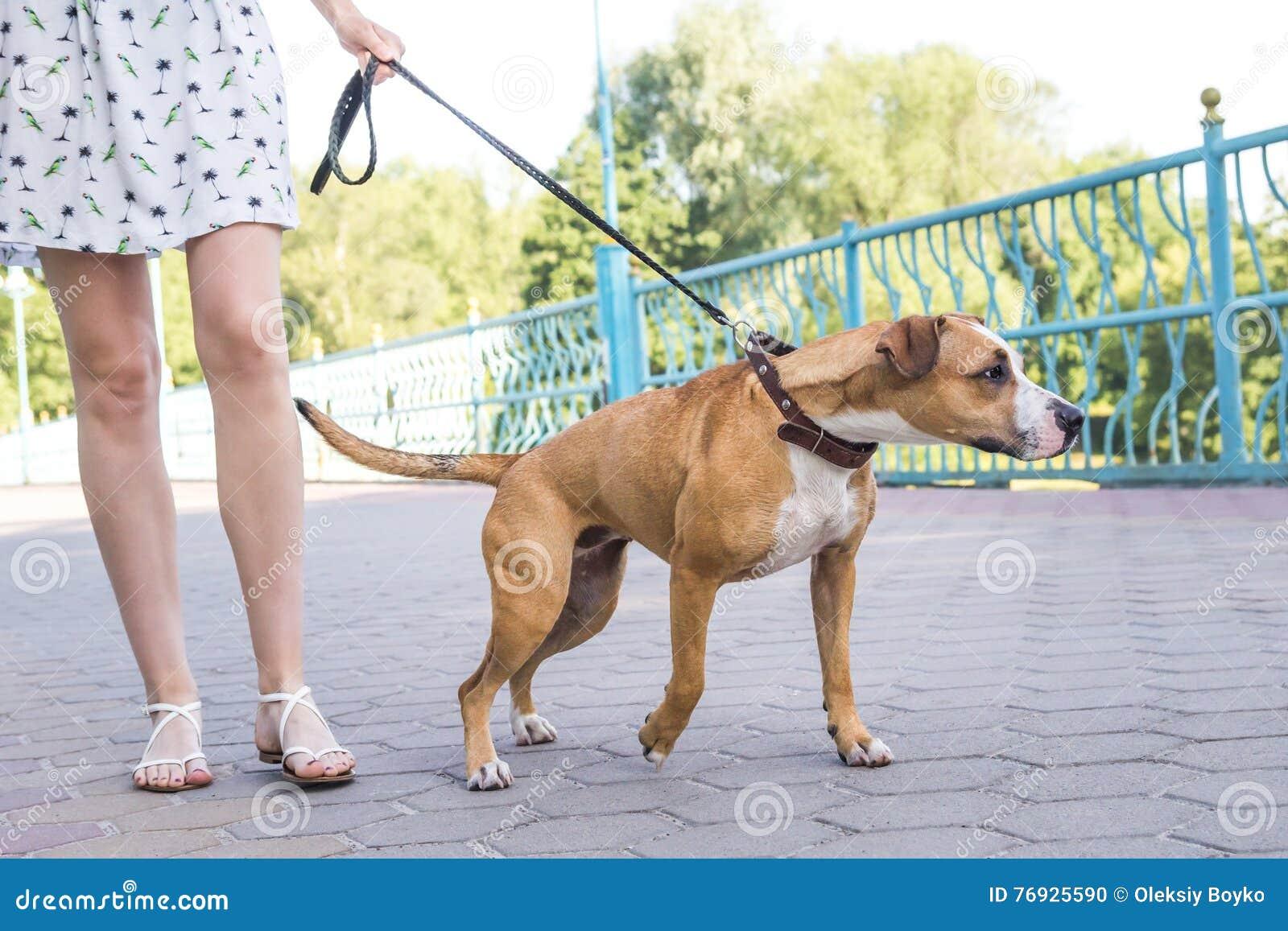 Hund som drar på en koppel