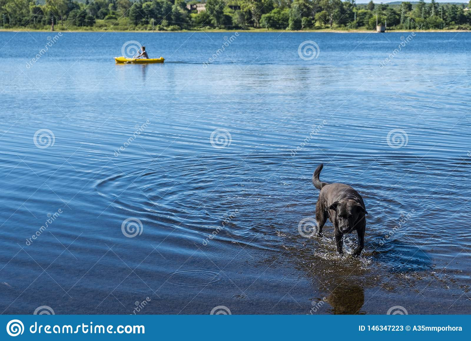 Hund som kommer ut ur en sjö var han spelar