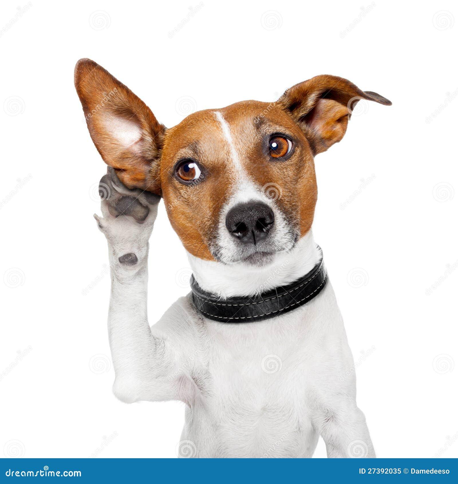 Drawing human ear royalty free stock photography image 25570937 - Hund Som Lyssnar Med Det Stora Rat Royaltyfri Foto