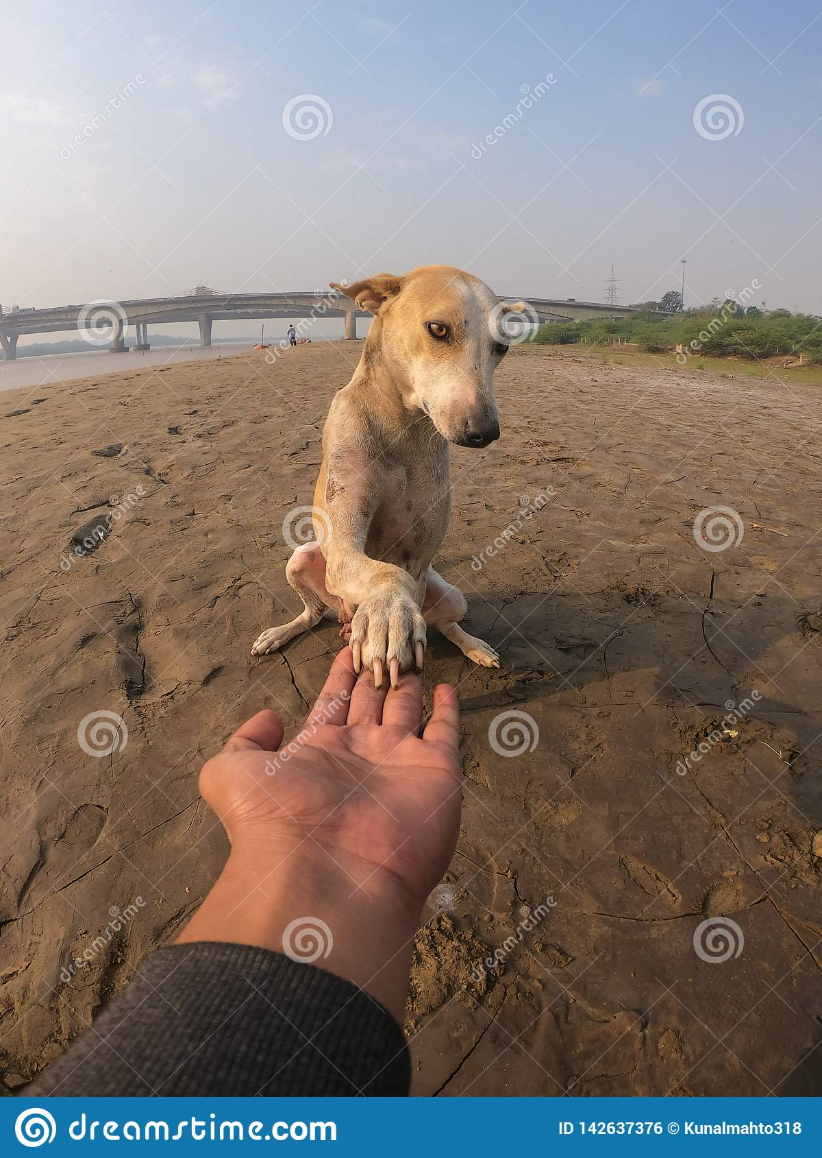 Hund som rymmer mäns hand