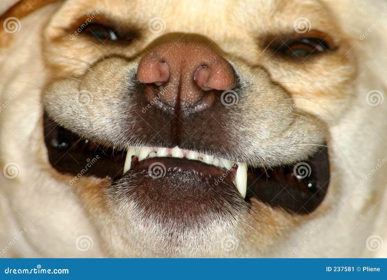 Hund som ser genomsnittlig