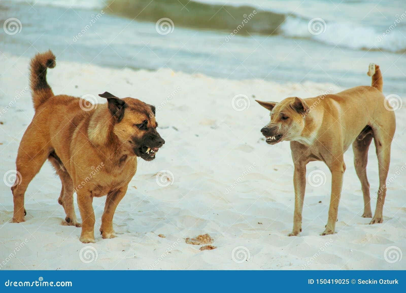 Hund som slåss i stranden