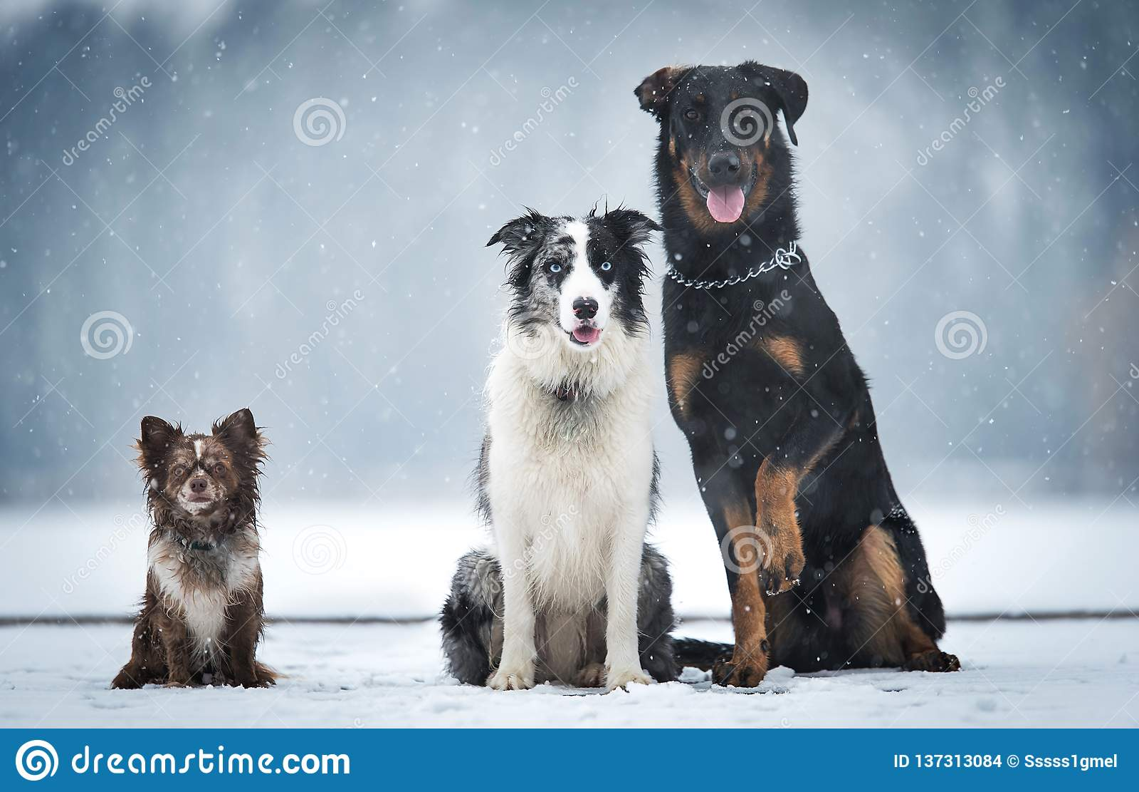 Hund som tre sitter i vintern, parkerar