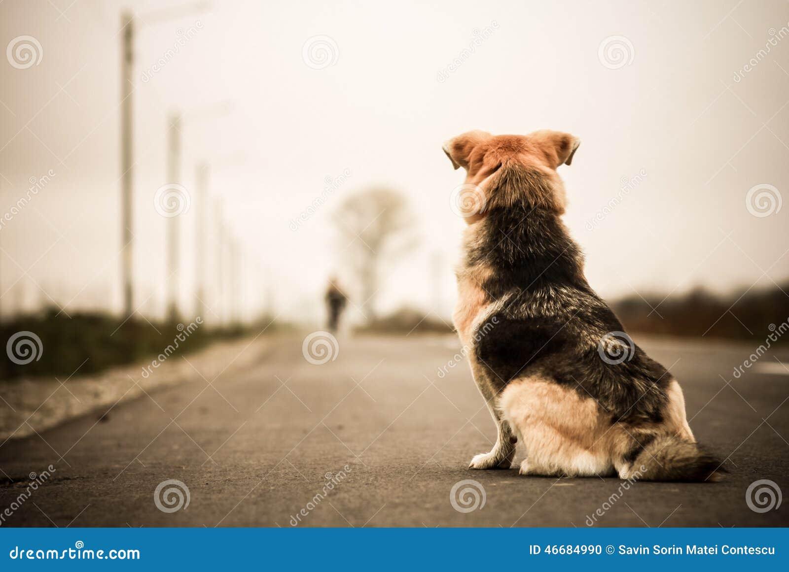 Hund som väntar i gatan
